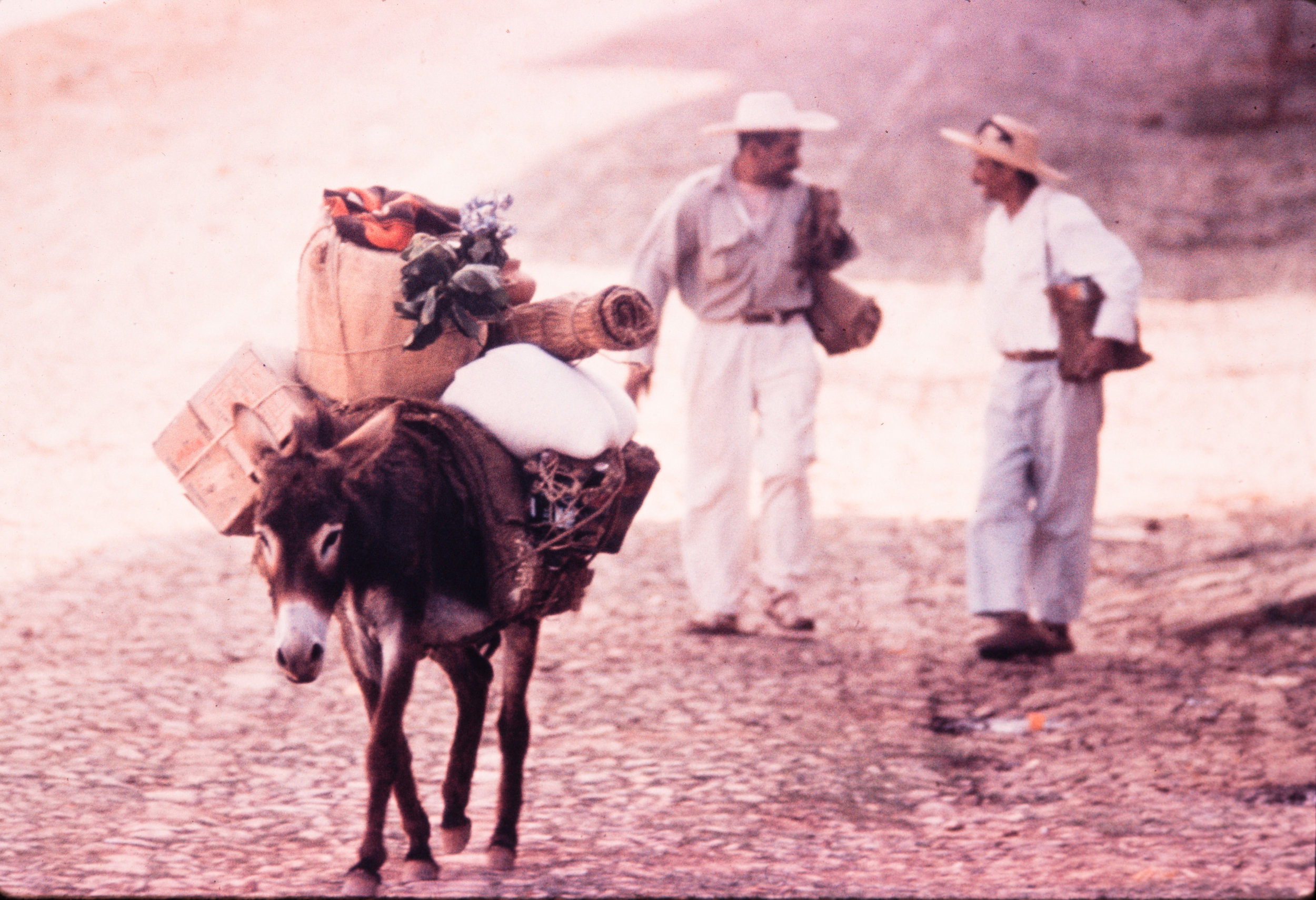 Donkey with two men walking, Mexico, 1957