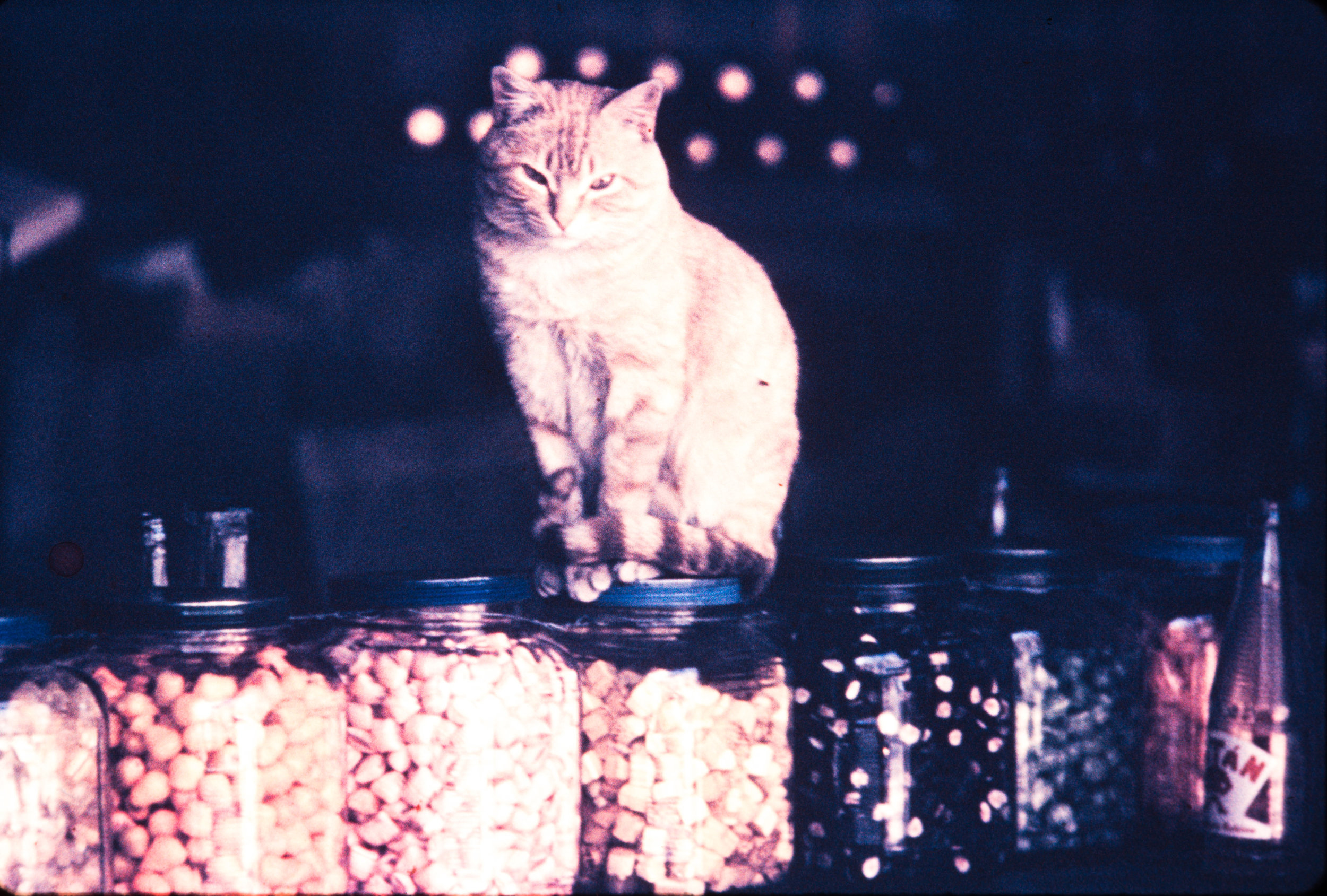 Cat sitting on jars, Mexico, 1957
