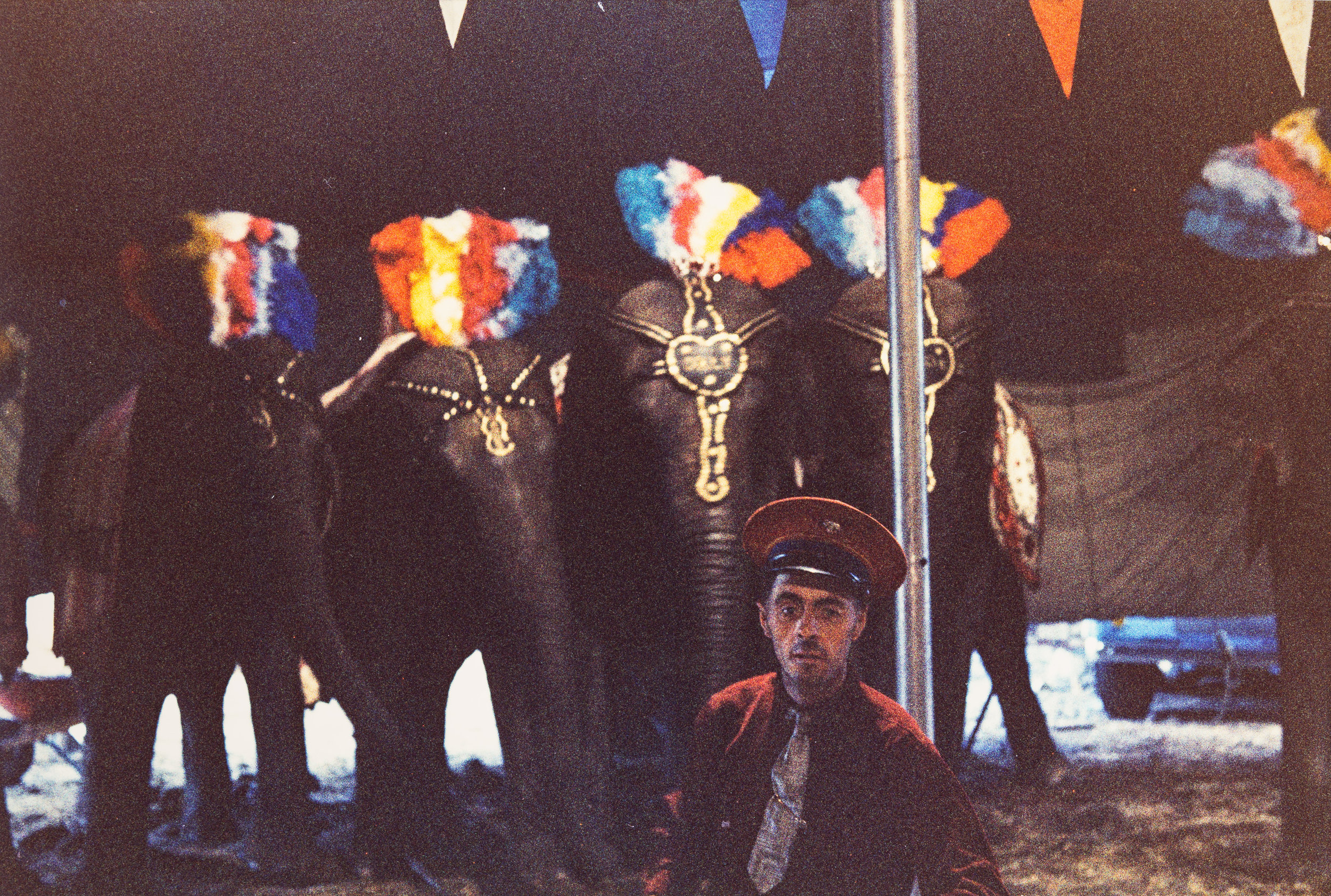 Man with elephants, NYC, 1959