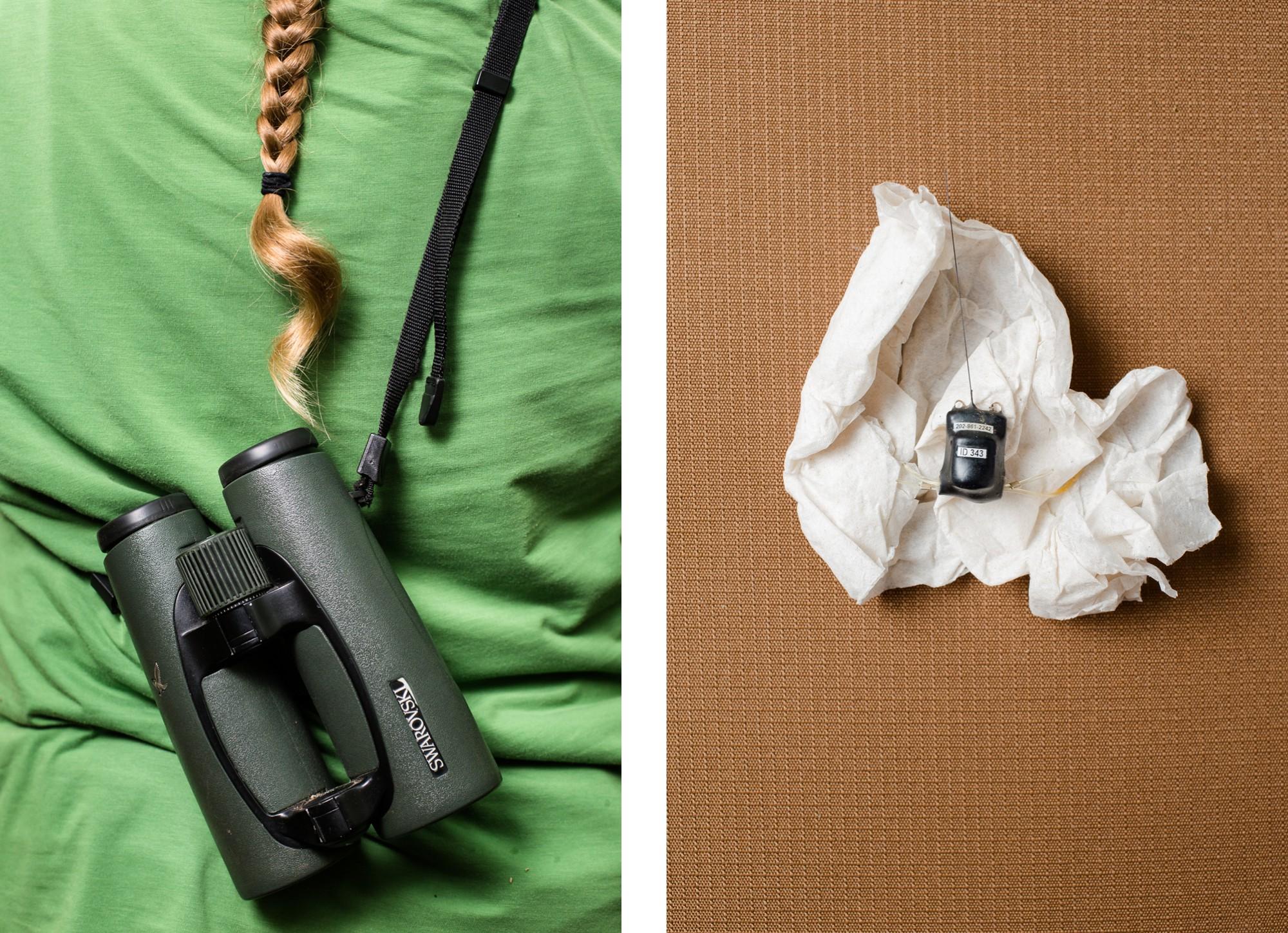 Photo of binoculars and bird GPS tag