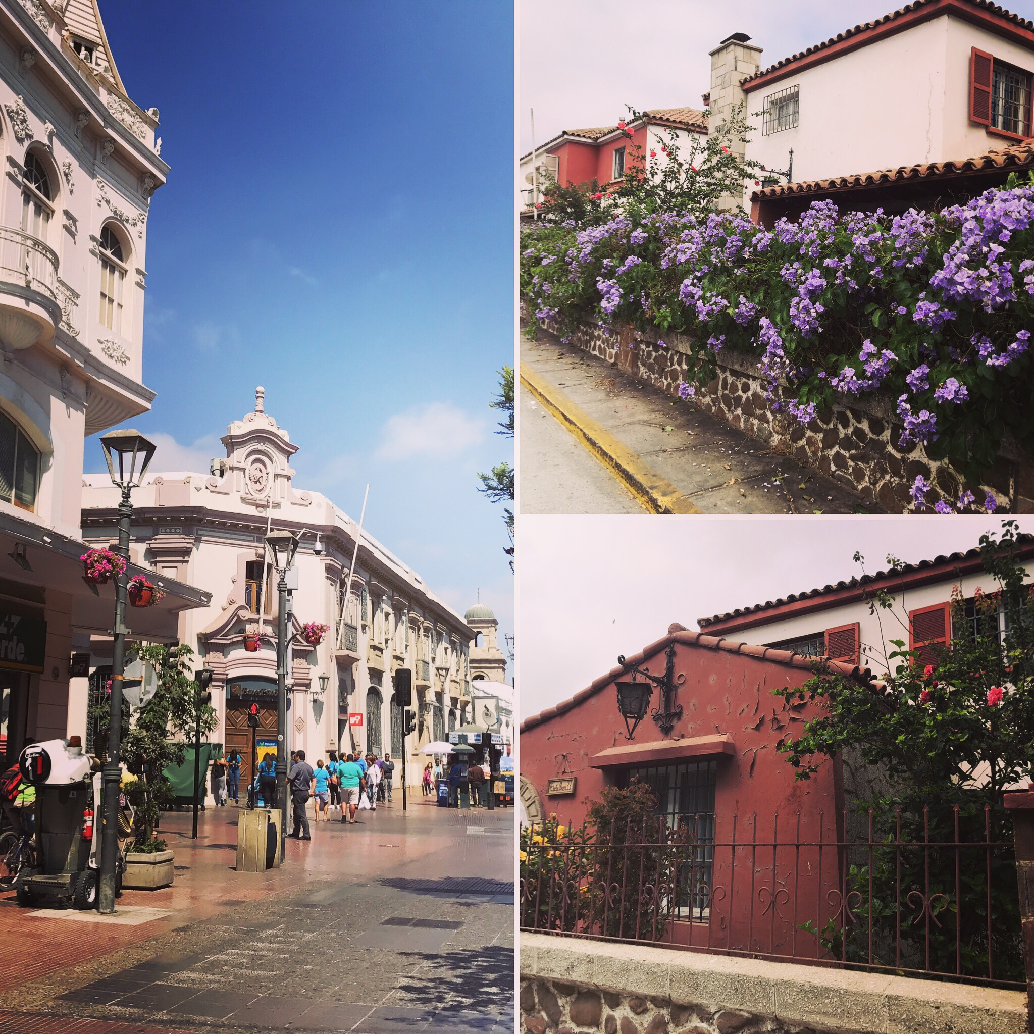 I noticed that La Serena has a lot of flowers: roses, hibiscus, and others I couldn't recognize.