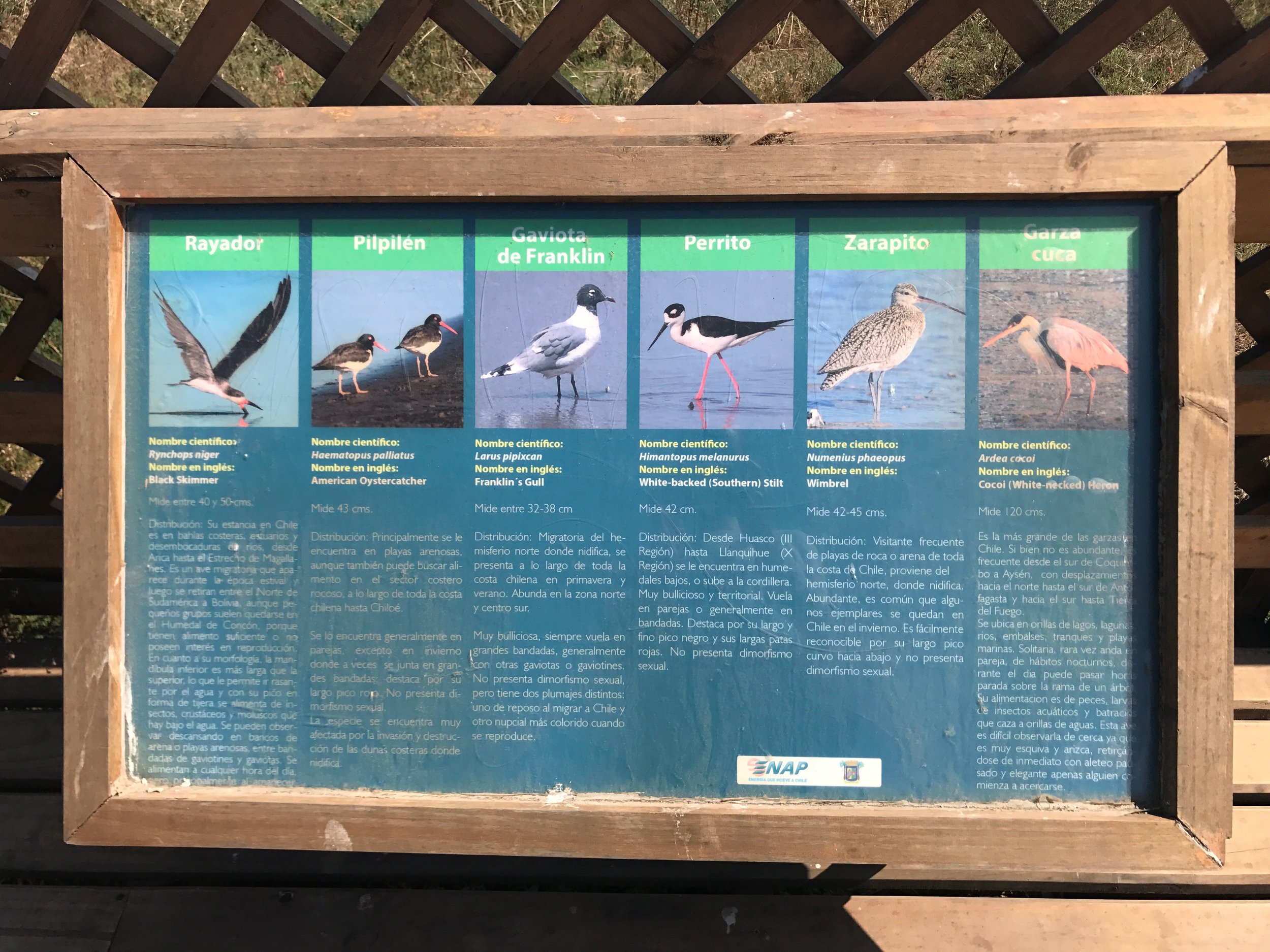 These are just some birds you can observe in the Humedal.