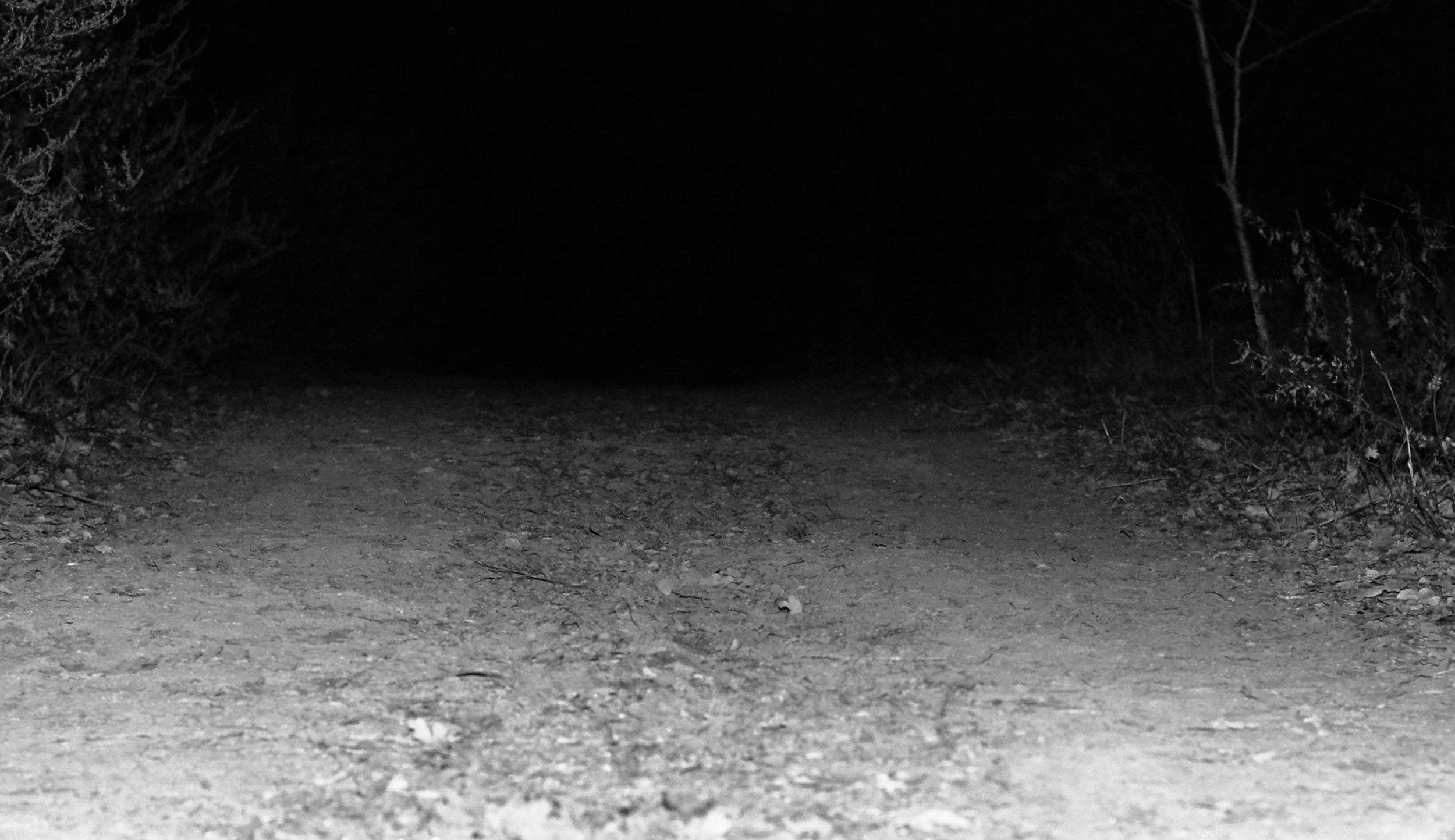 elvira-kolerova-semi-zine-photography-interview-submission-2018-9.jpg