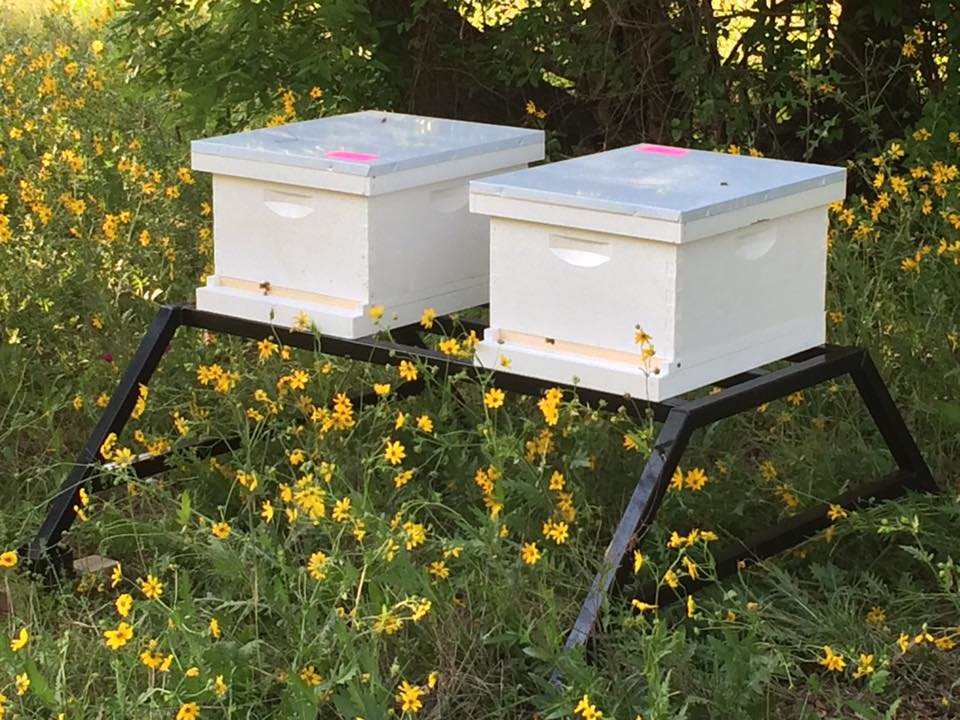 BEE C HIVE STANDS  (CLICK TO SEE MORE)