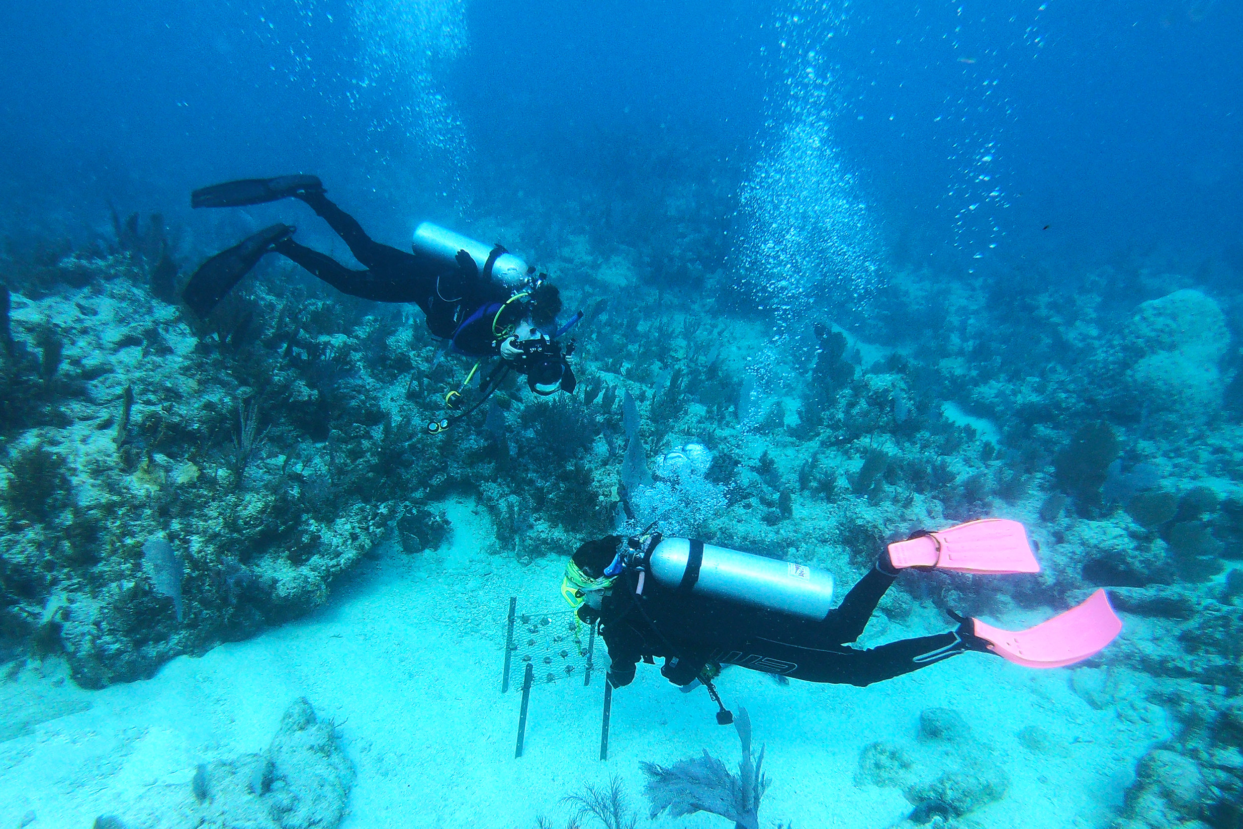 Snapping photos of Kate Gould as she finishes installing a coral table at a reef in Key Largo.