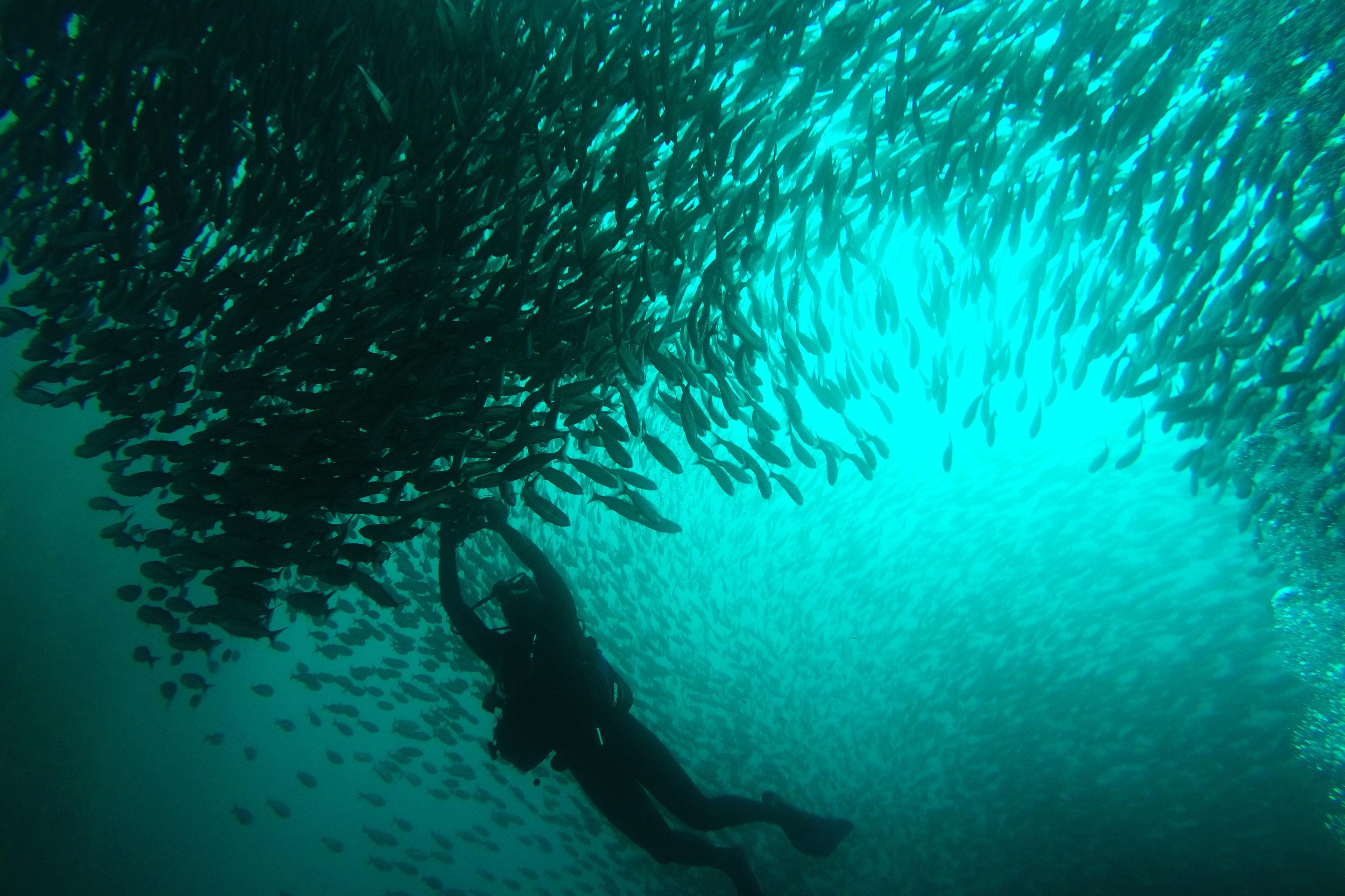 Photographing a massive school of fish at León Dormido, Galápagos Islands | October 2015