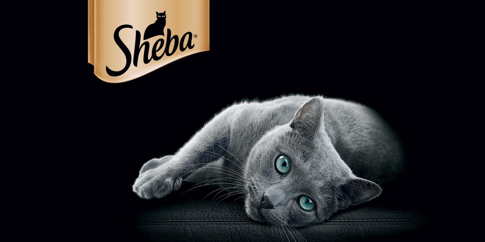 sheba-overview.jpg