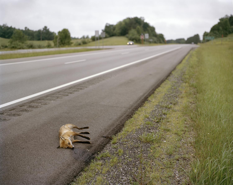 Dead-Fox-James-A.-Rhodes-Appalachian-Highway-Vinton-County-OH.jpg