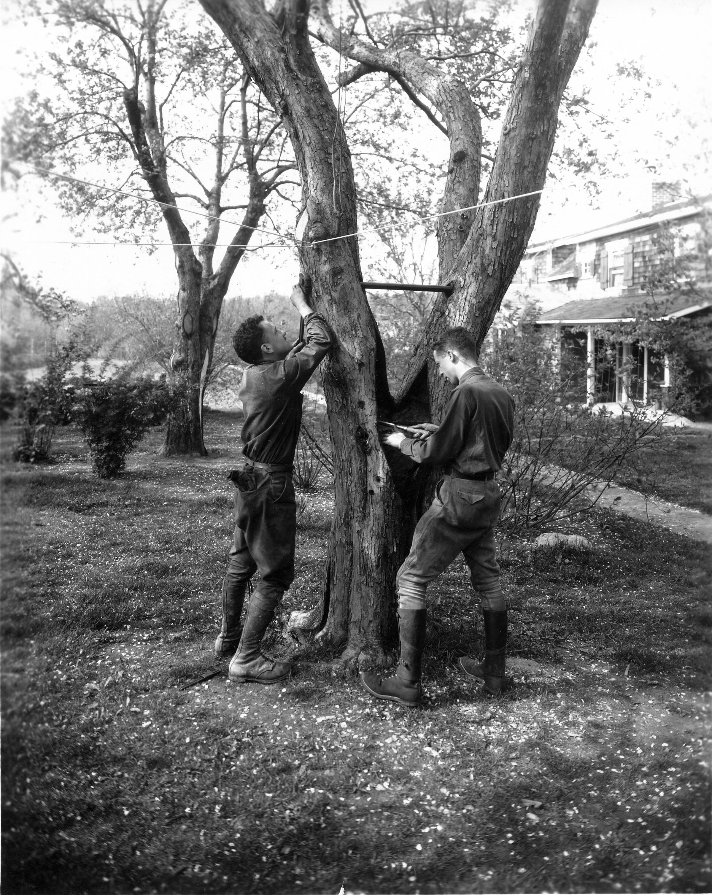 Bartlett Historical Tree Treatment 2.jpg