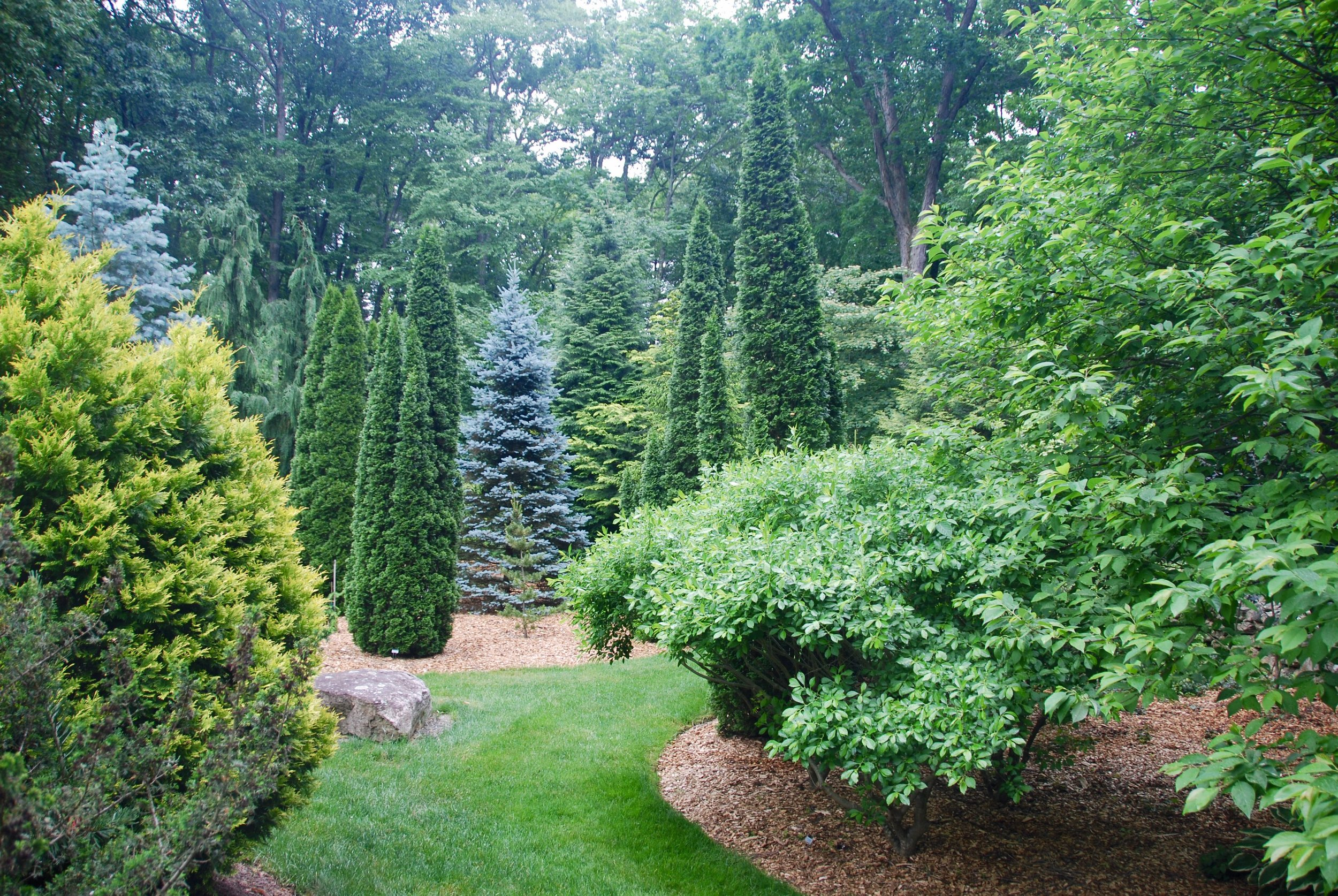 Larned Number 2 Conifer Garden.jpeg