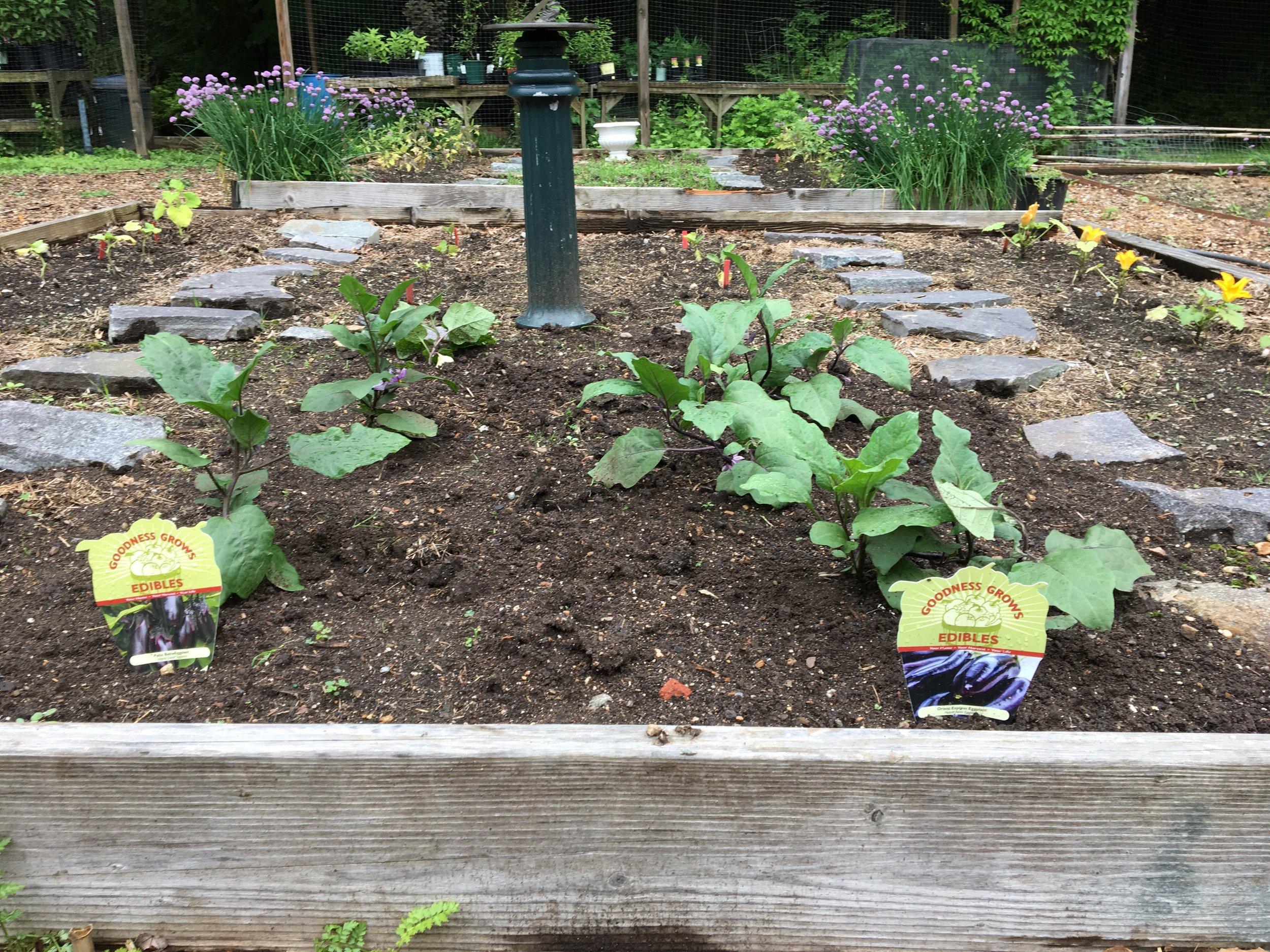 veggie garden 3.jpg