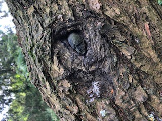 head photo 2.jpg