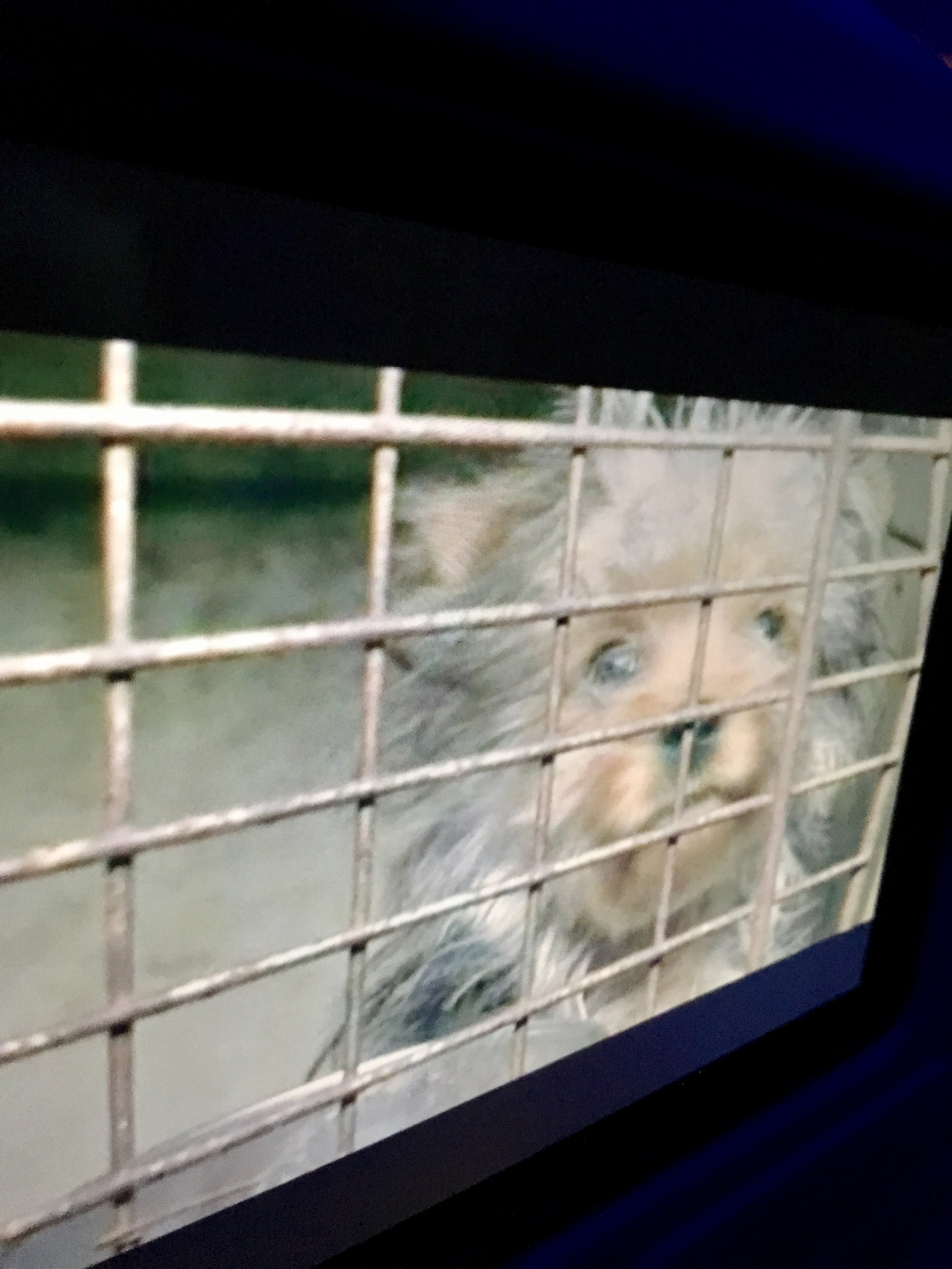 We did get satellite TV on our flight, but they had these really sad animal rescue commercials with Sarah McLachlan in the background. Was this a TV screen or a mirror? Sorry, little guy. We felt trapped, too.