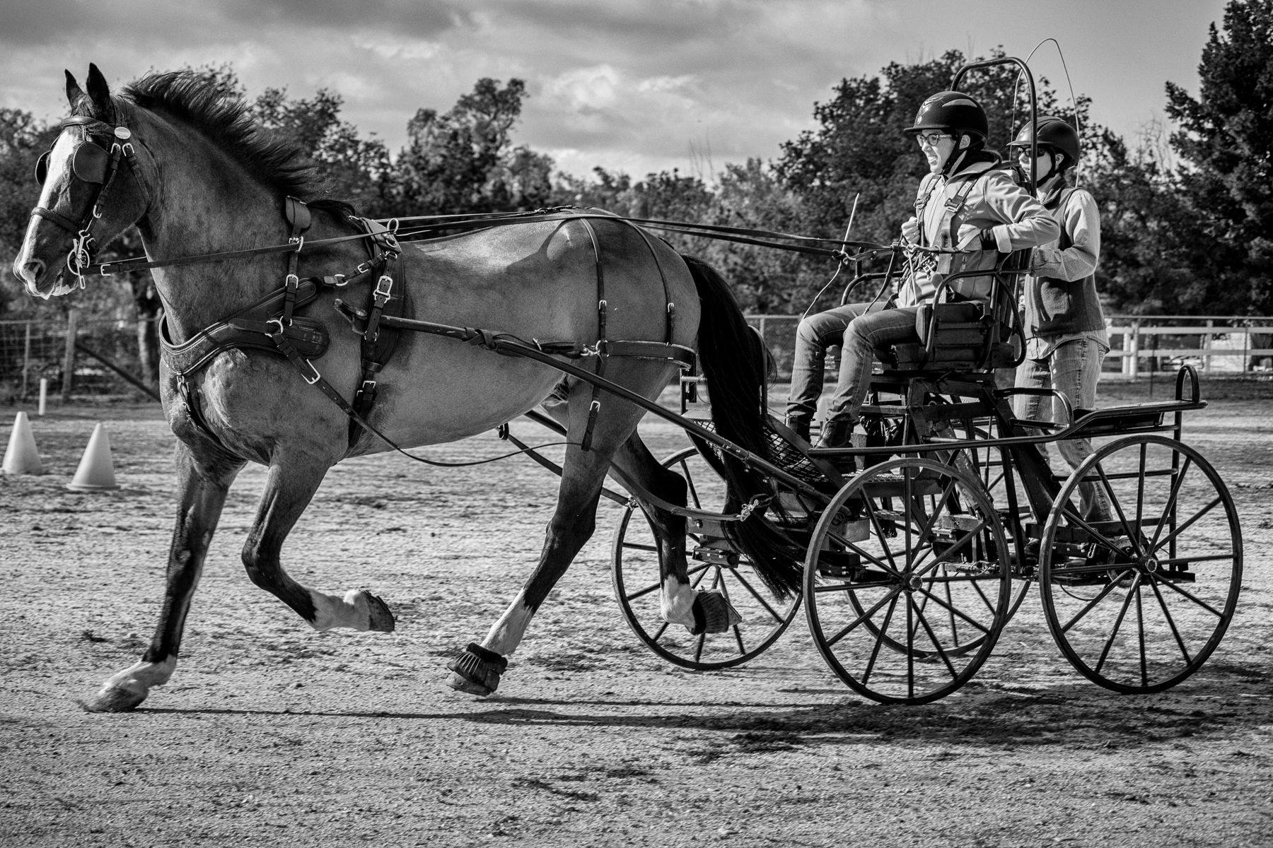MA-Hold Your Horses-6x4-20160123-IMG_0527-Edit.jpg