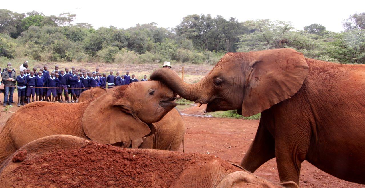 Adorable elephants at Sheldrick's Elephant Orphanage