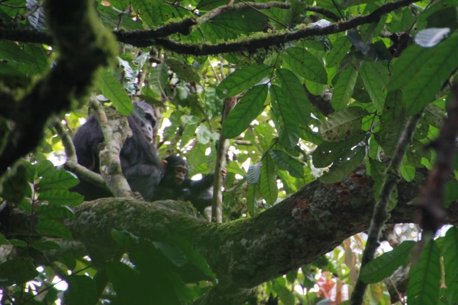 A slightly better photo of mum and bub through the trees