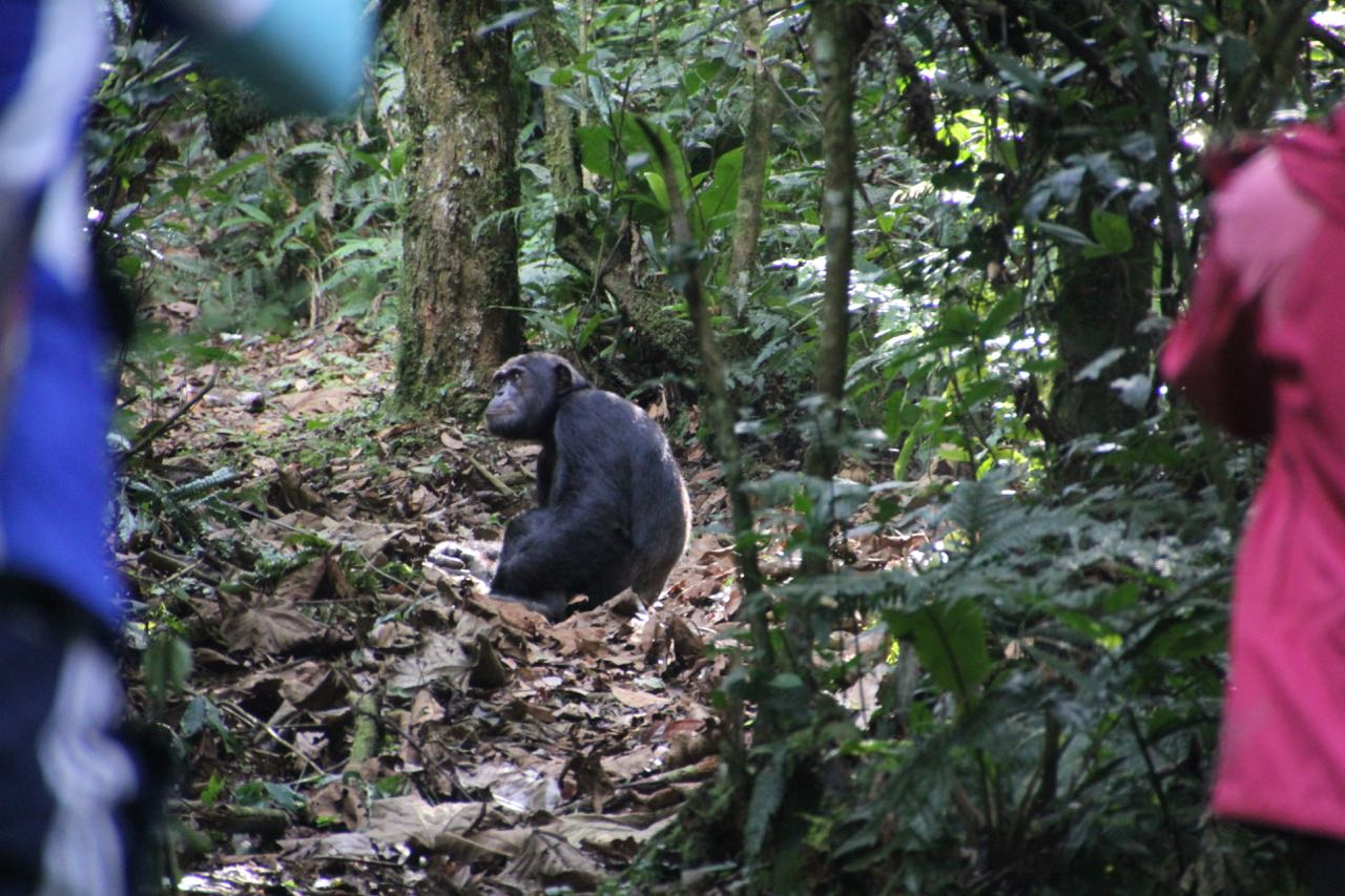 Edging closer to our closest animal relatives