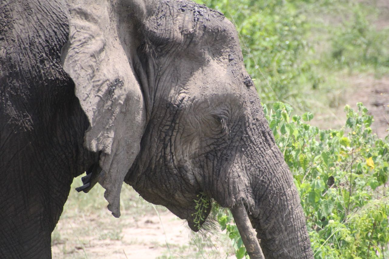 50 elephant.jpg