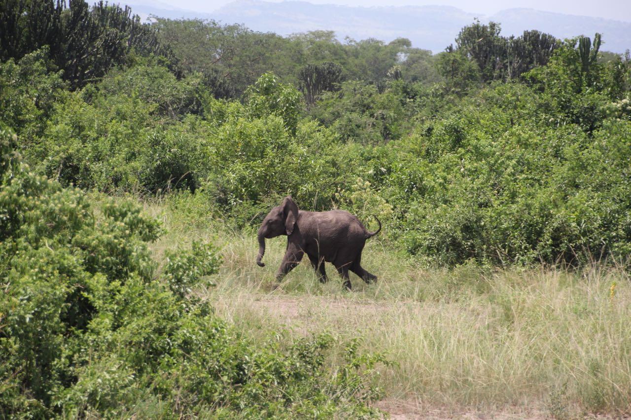 51 elephant.jpg