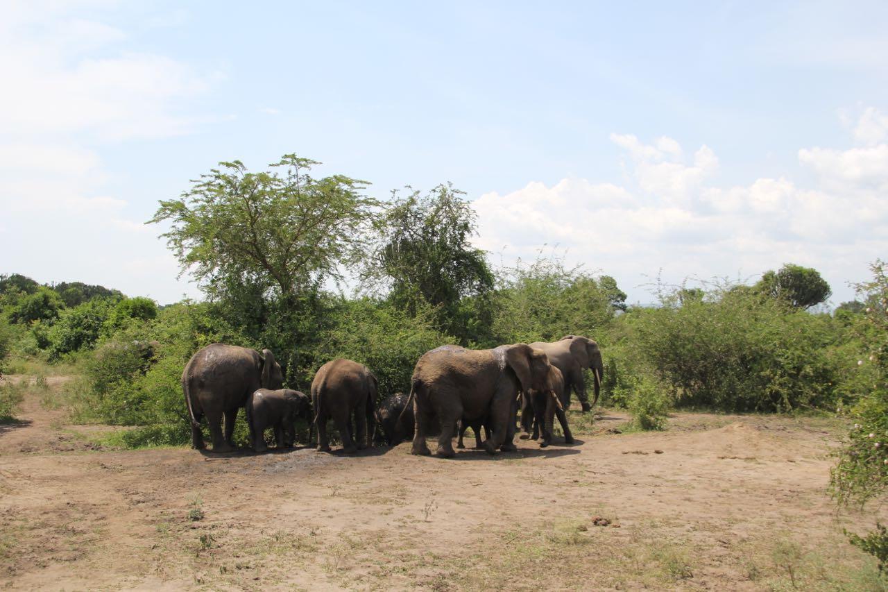 56 elephants.jpg