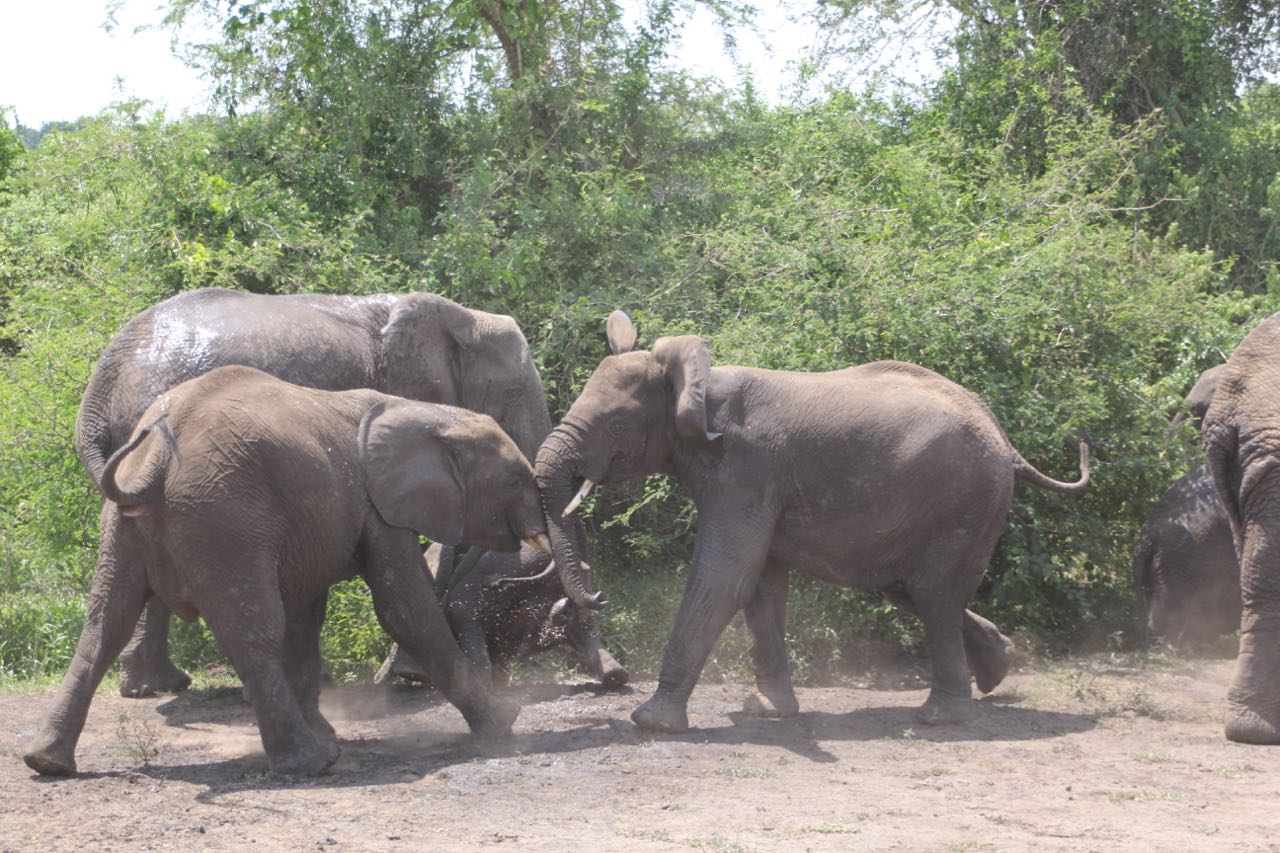 57 elephants.jpg