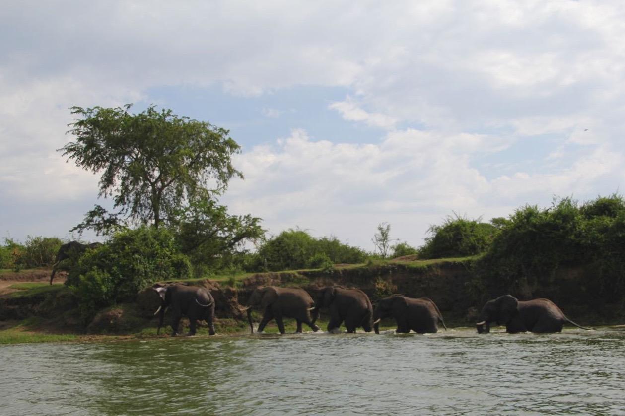 64 elephants.jpg