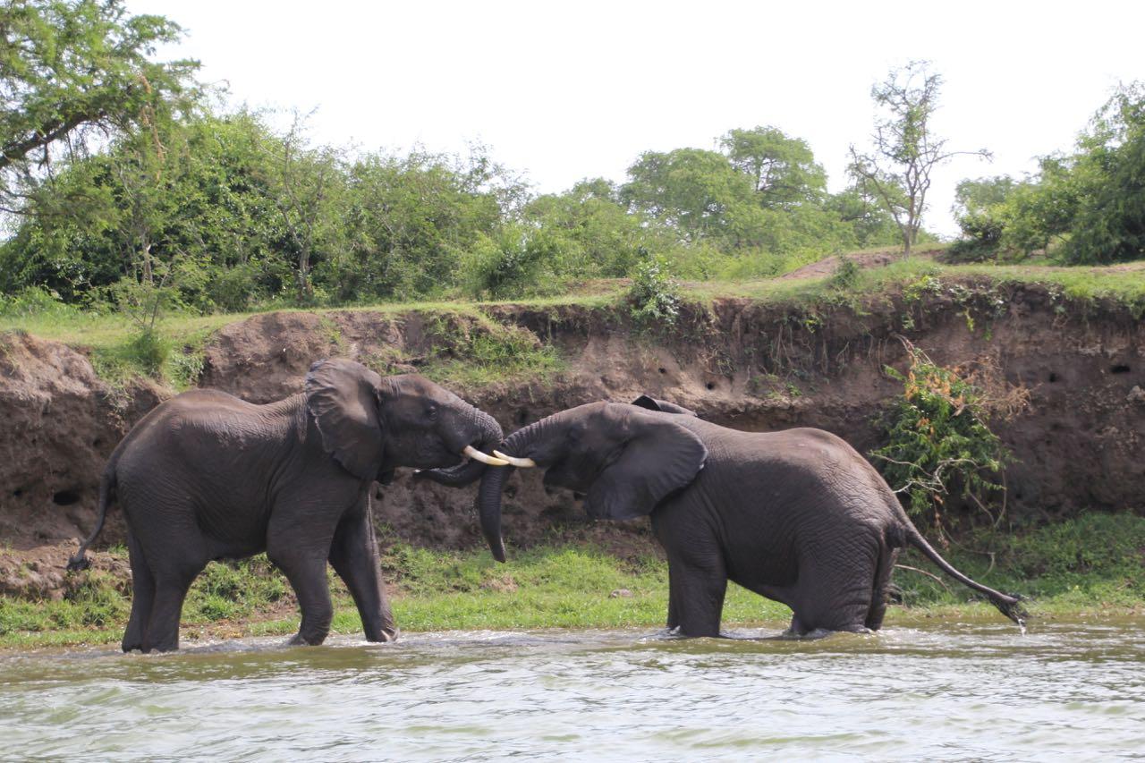 66 elephants.jpg