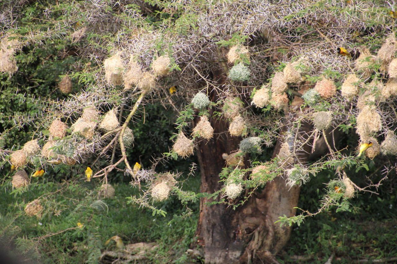 70 birds nest.jpg