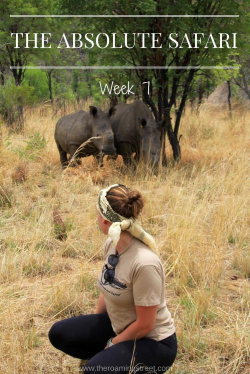 The Absolute Safari Week 7