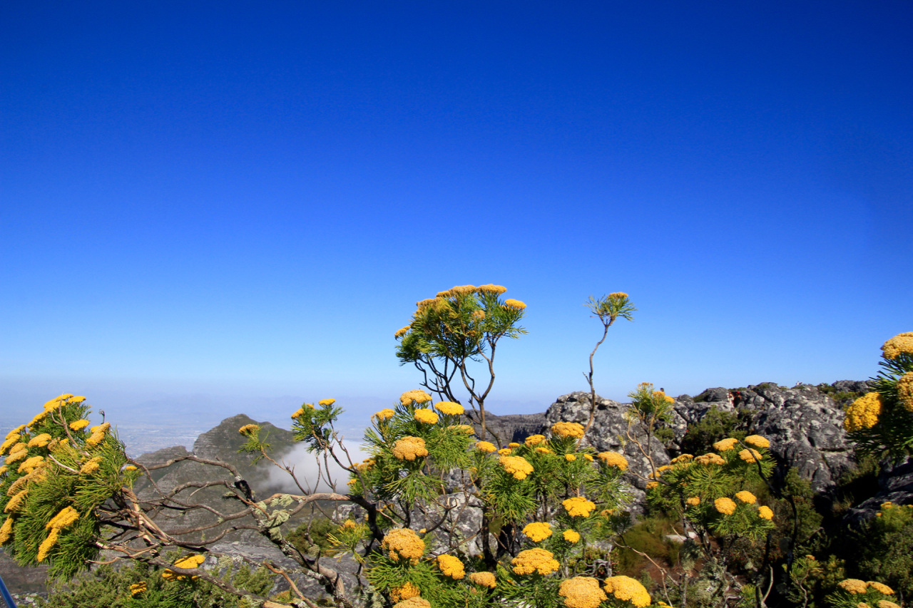 Table Mountain_5149.jpg