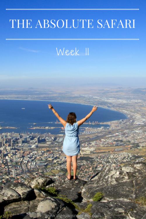 The Absolute Safari Week 11