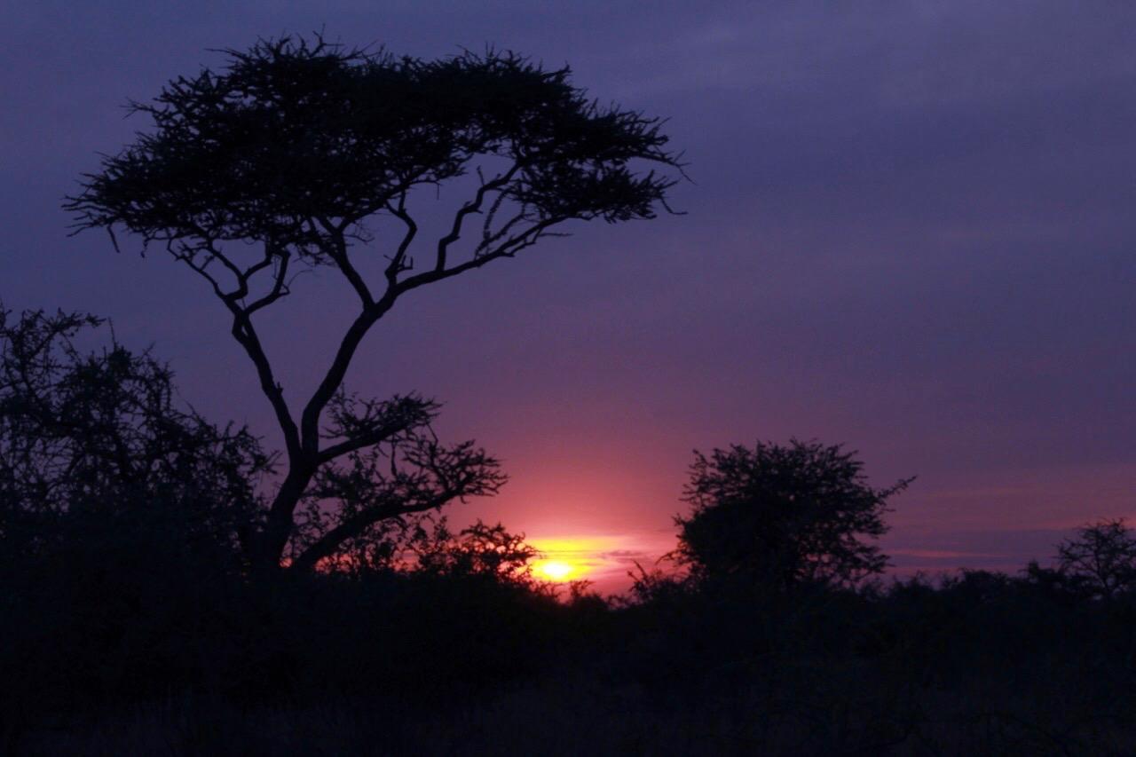 A classic Serengeti Sunset