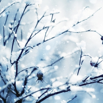 snowy branches.jpg