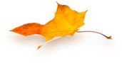 fall leaf1.jpg