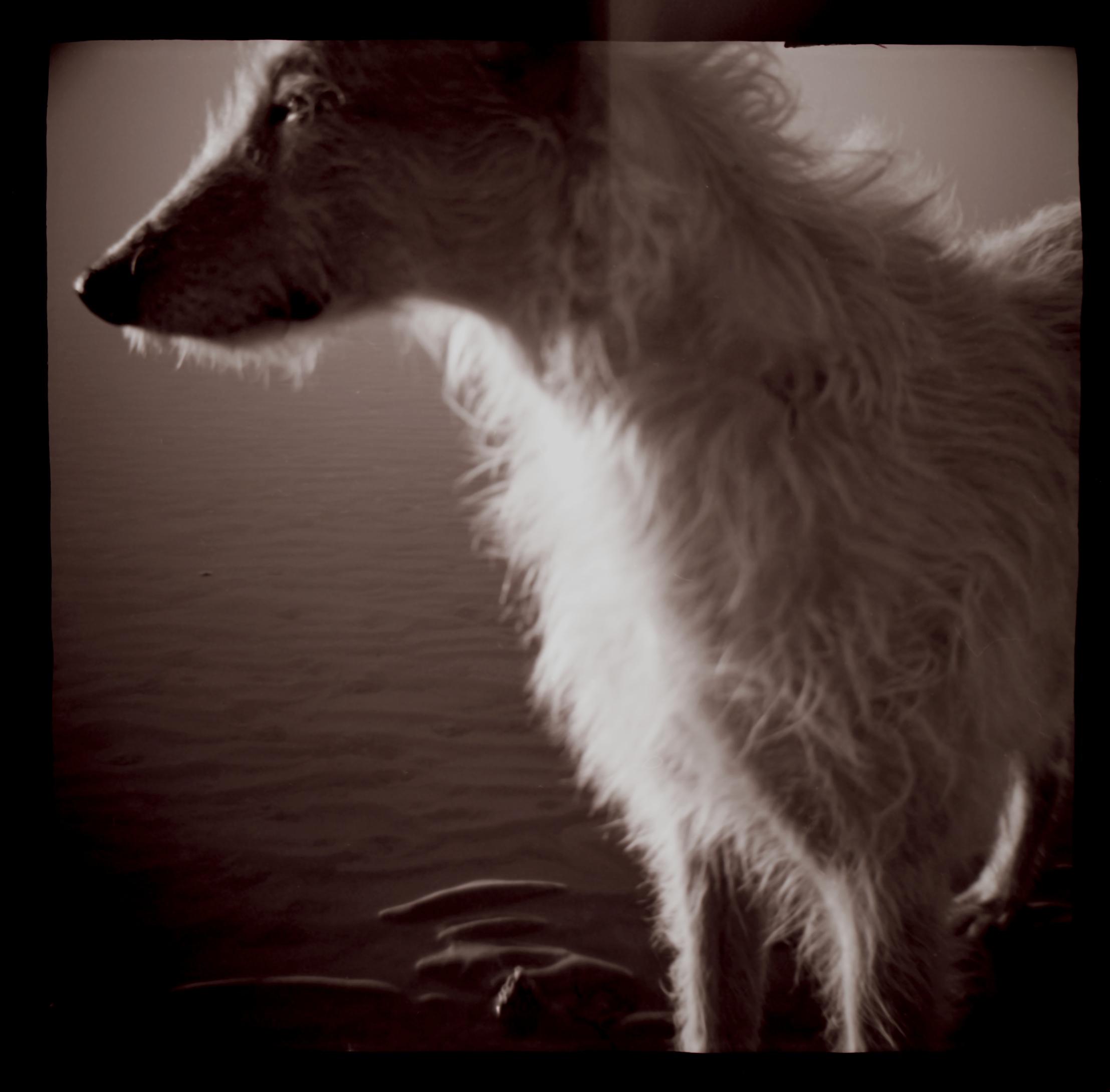 Hugh's dog Minnow