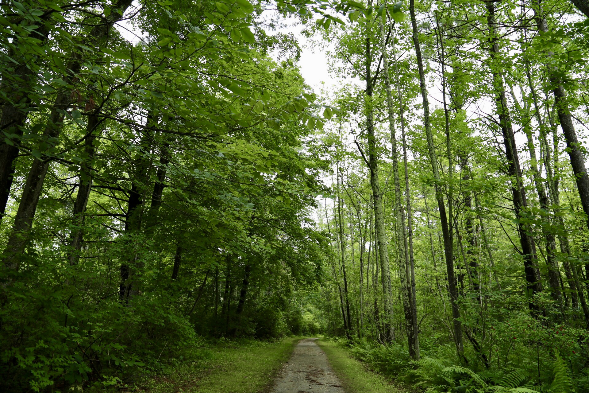 The path from the lake to Kripalu
