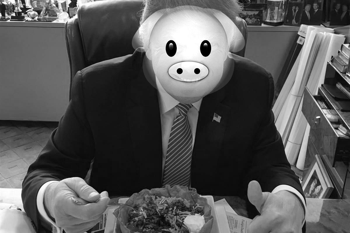 """One of our more recent """"Colonizers,"""" eating a taco taco bowl. He probably would have gotten along splendid with the first European  hogg  inhabitants of Plum Island. The first  hoggs  were eventually evicted from the Island, due to their over-consumption and inconvinient tendency to provoke erosion."""