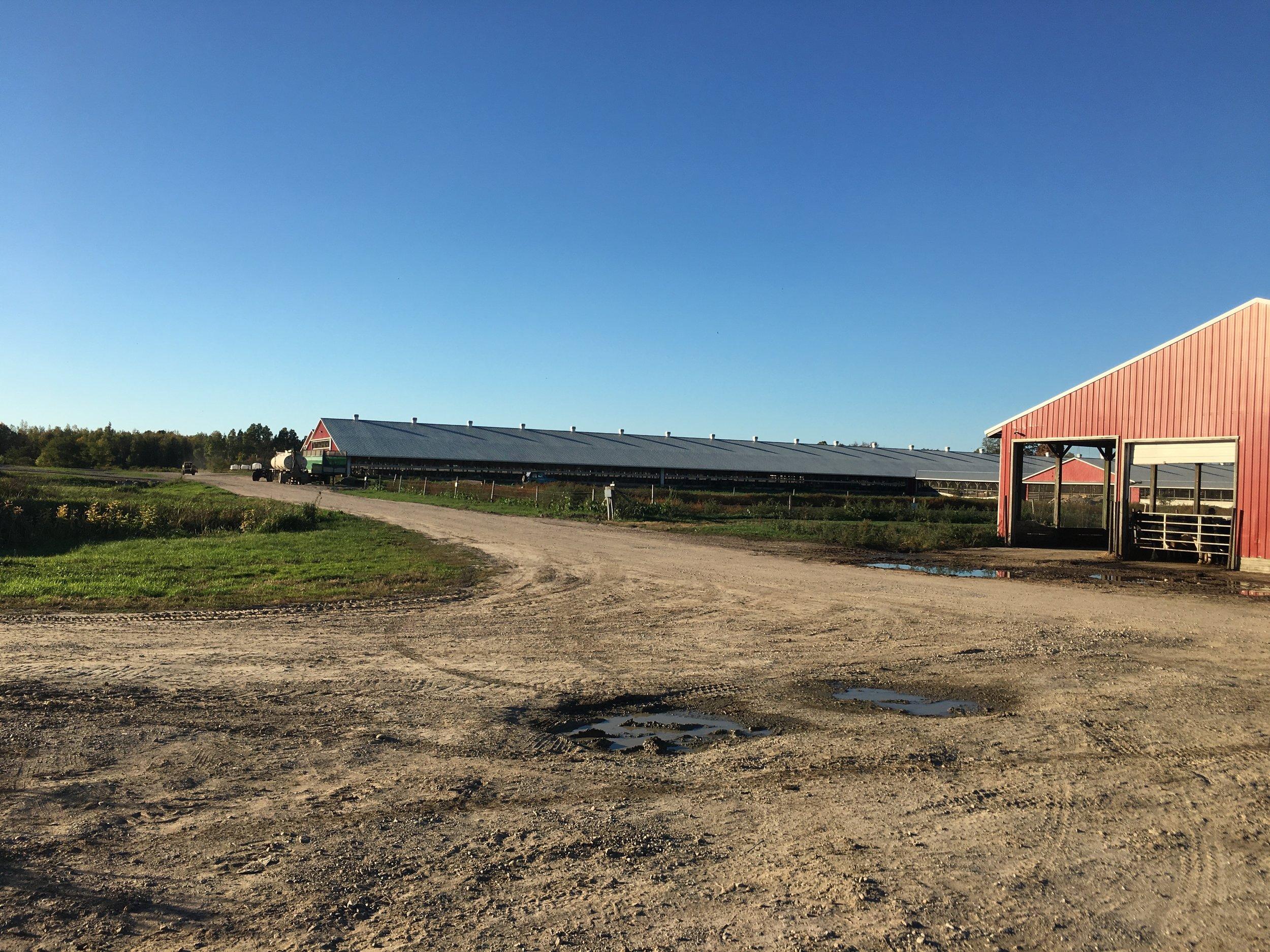 Dairy farm in Hermon, NY (Photo: Julianne DeGuardi)