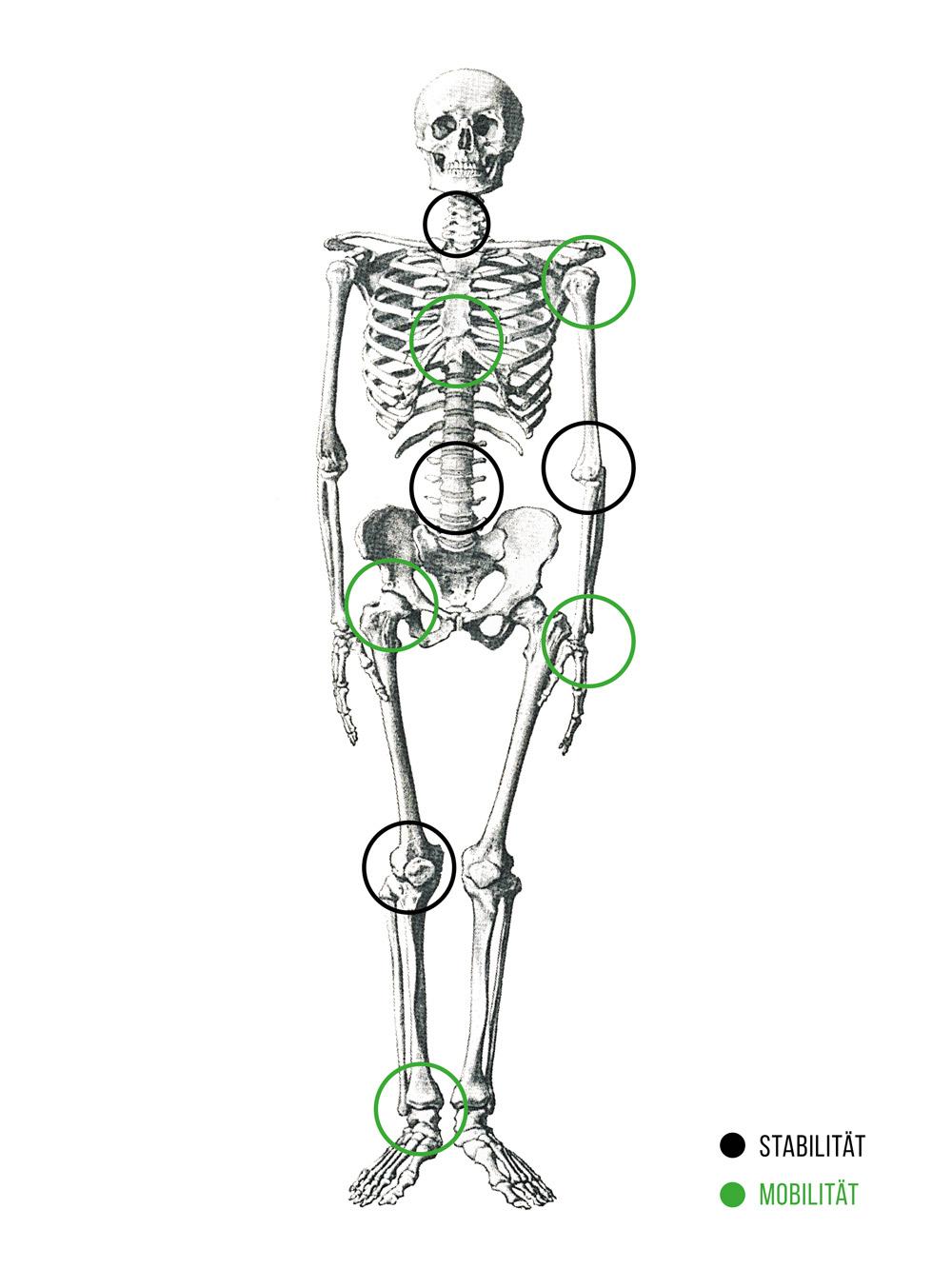 Abb. 1: Mobilität und Stabilität der Gelenke