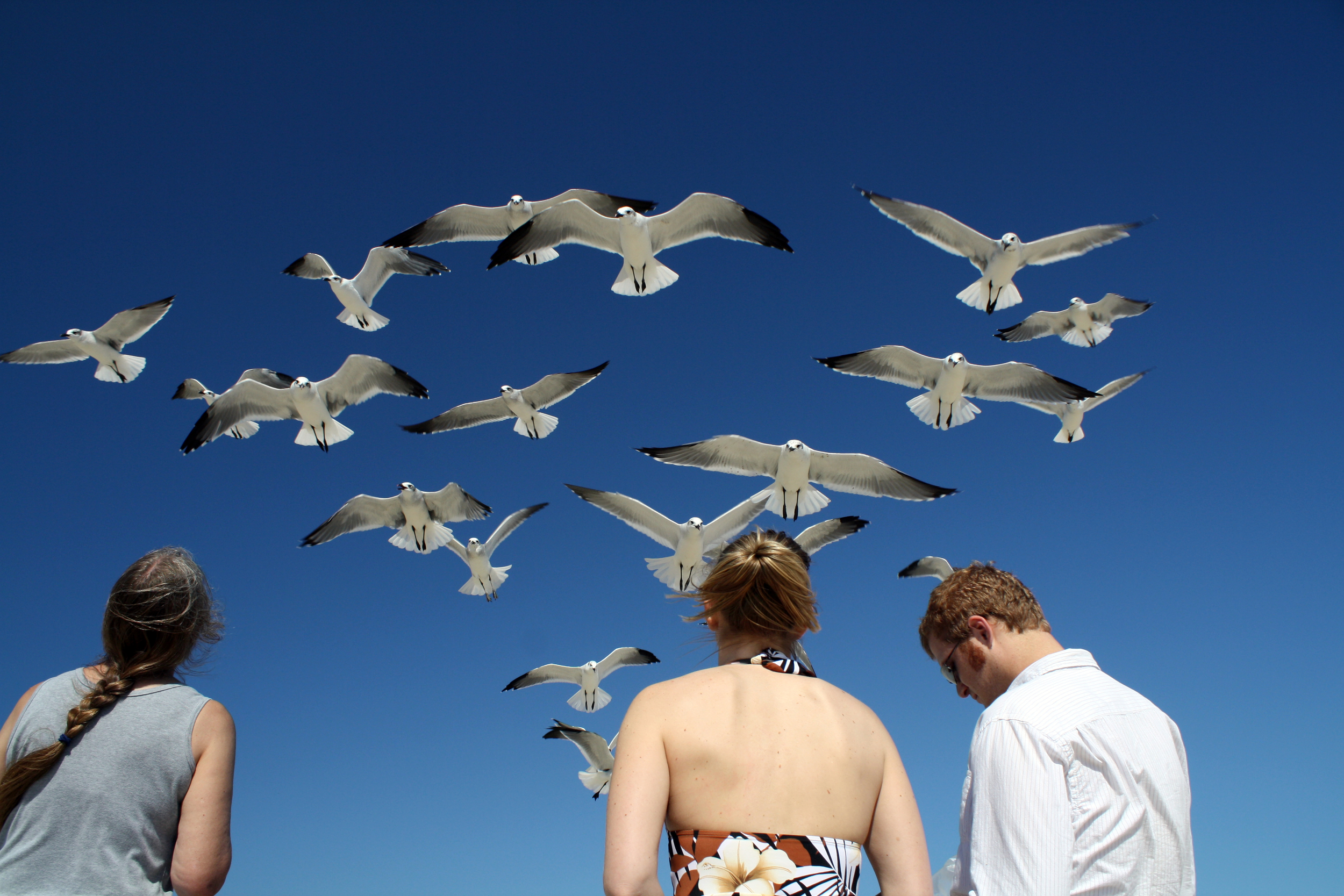 Seagulls flock above a trio of beachgoers in Delaware.