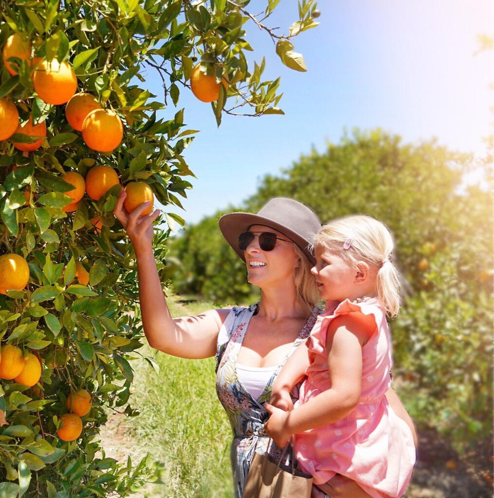 Stopping to pick some fresh oranges on the Bella Vita tour