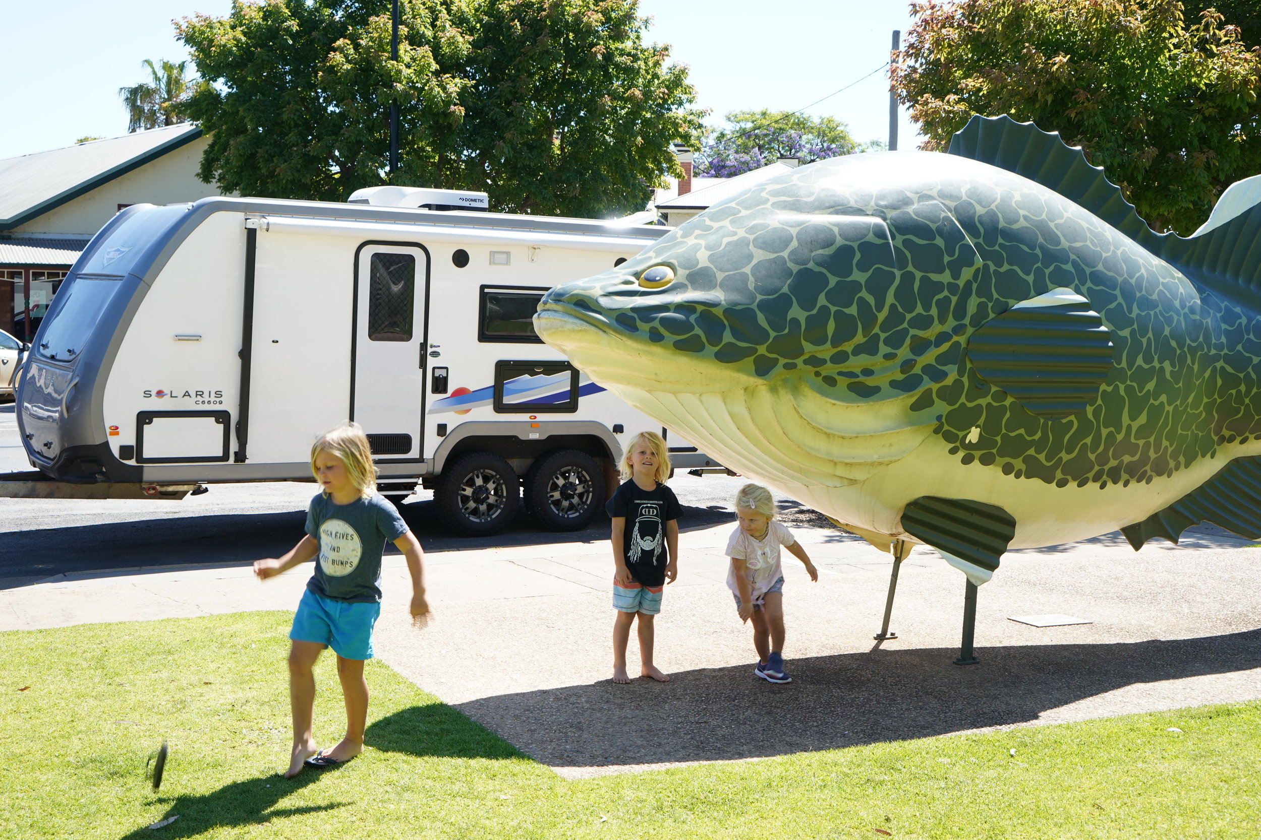 THE GIANT MURRAY COD IN TOCUMWAL.