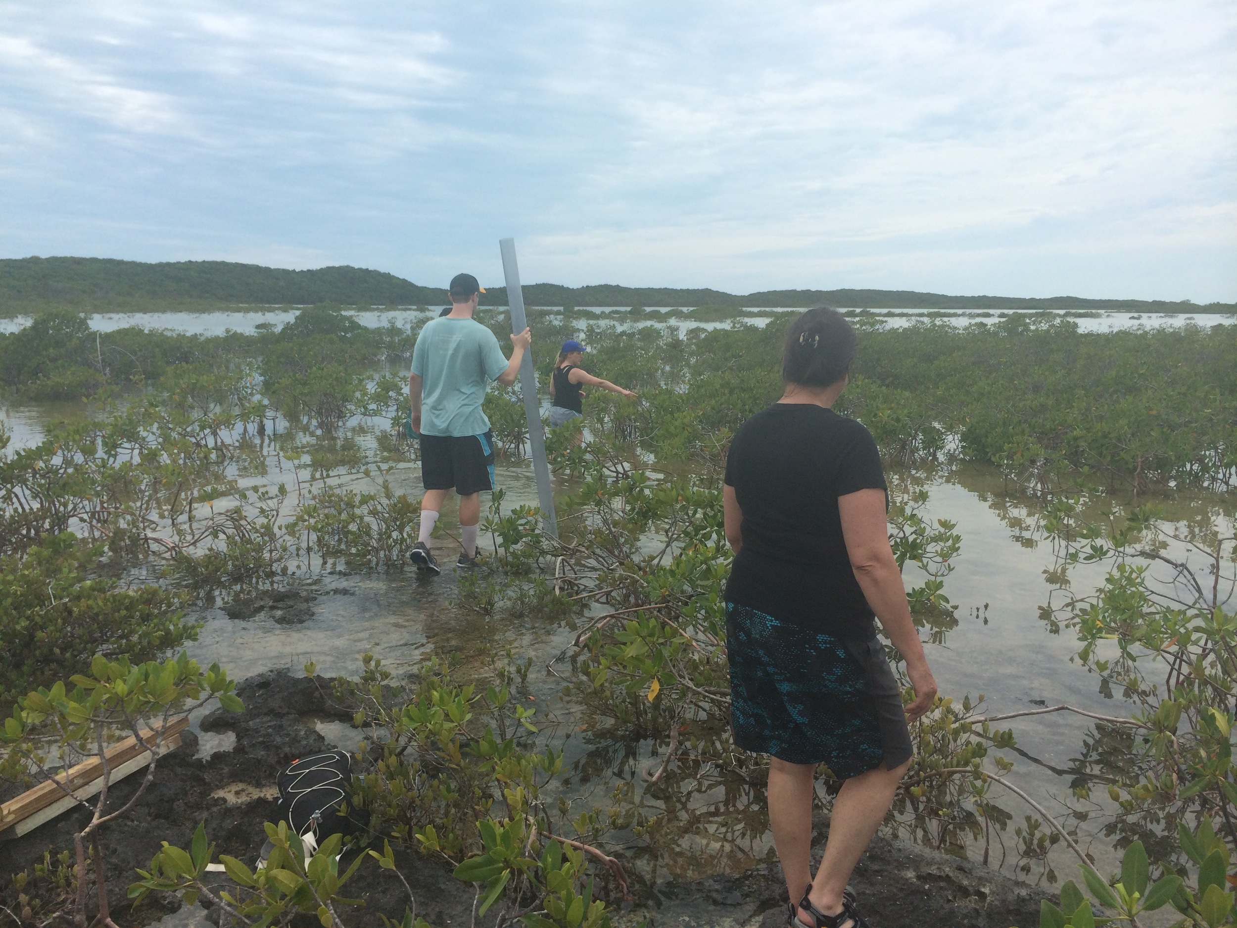 Sediment coring in a mangrove swamp in the Bahamas.