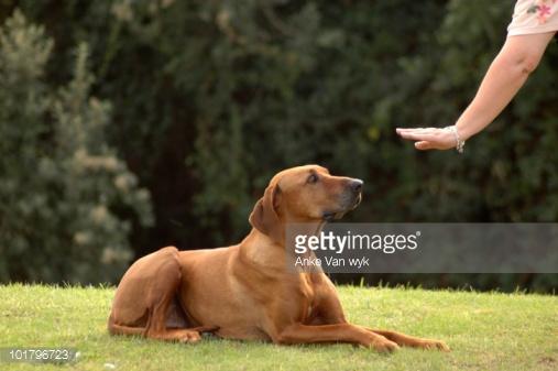 Photo by Anke Van wyk/Hemera / Getty Images