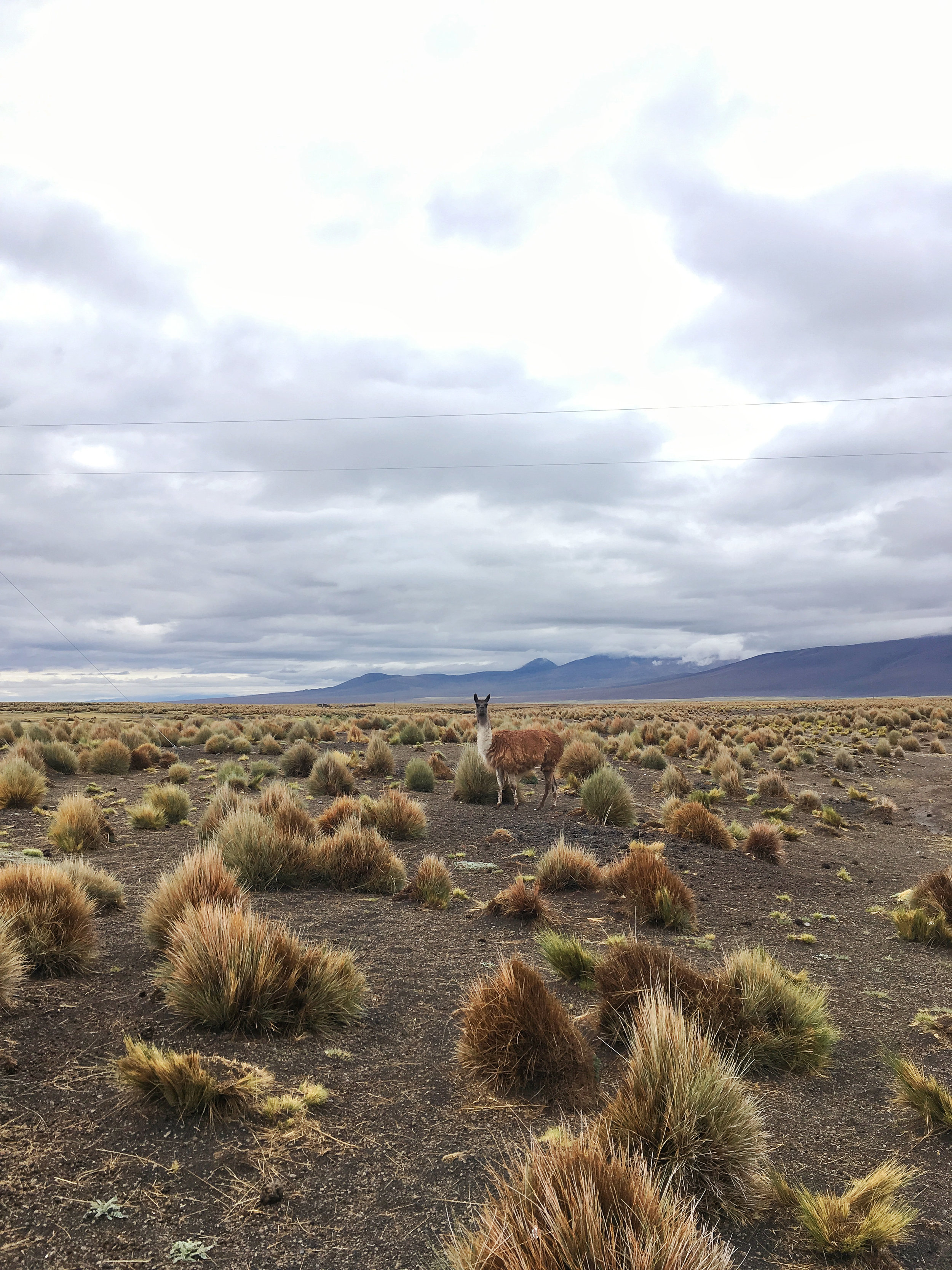 Nothing but open space...and Llamas