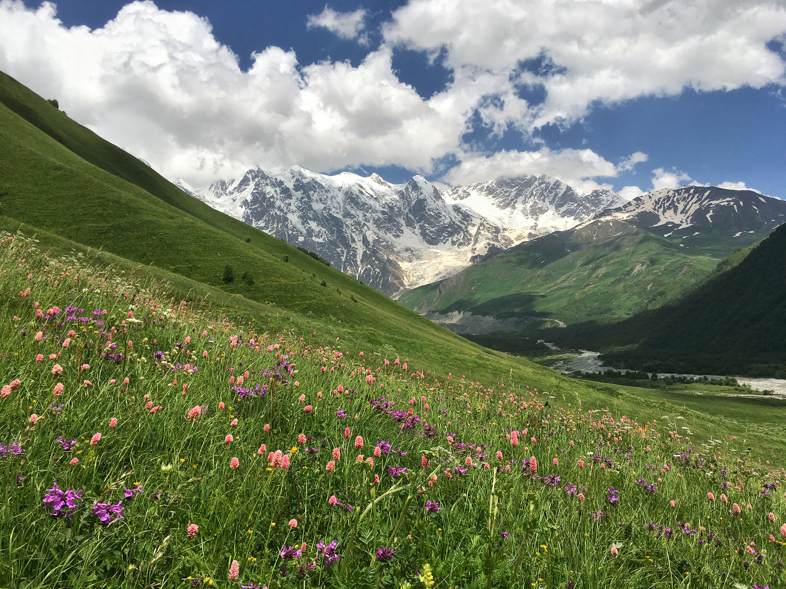 There is nothing quite like mountains and wildflowers