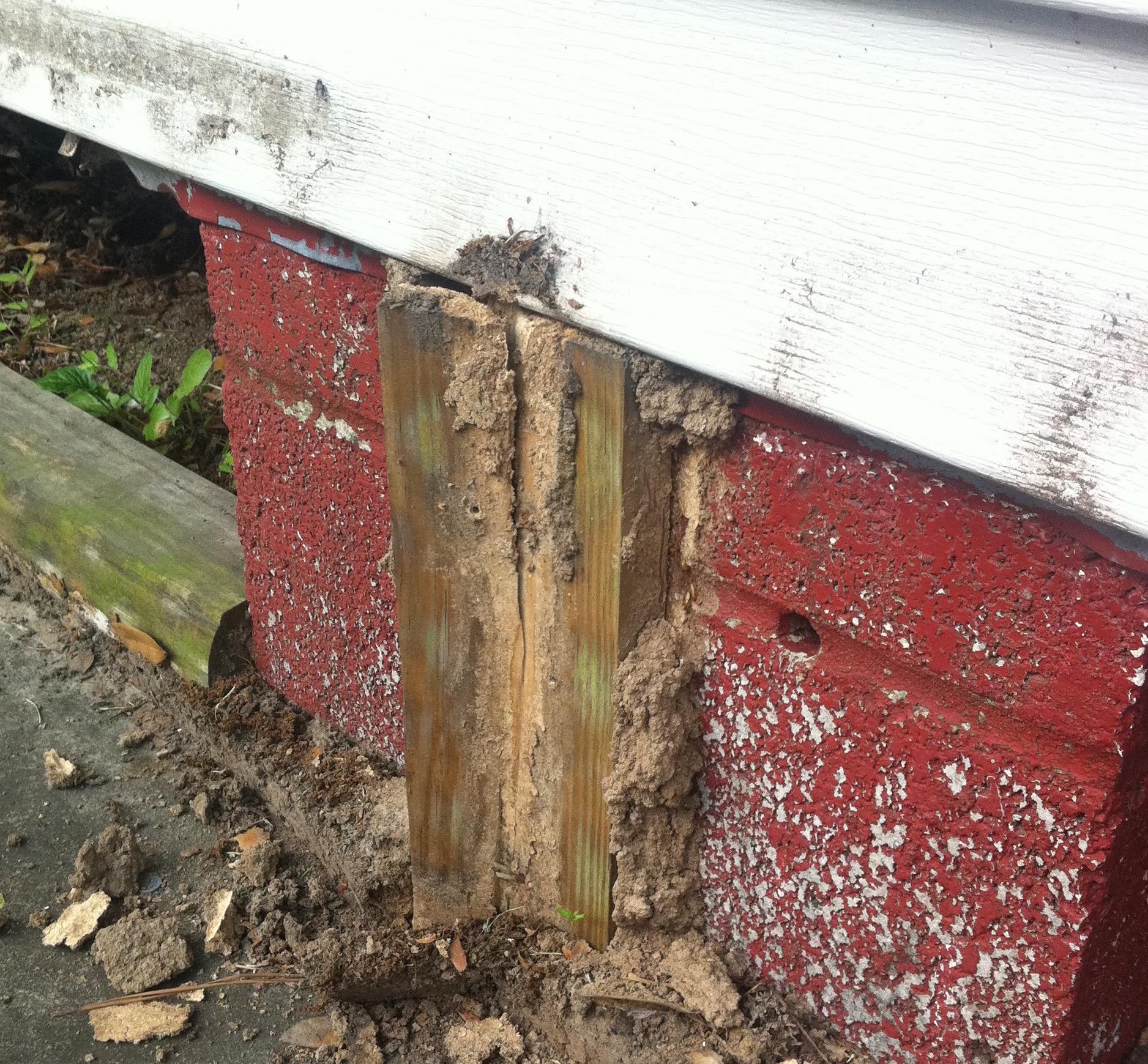 Termite Inspection, Termites, Termite Inspection New Orleans