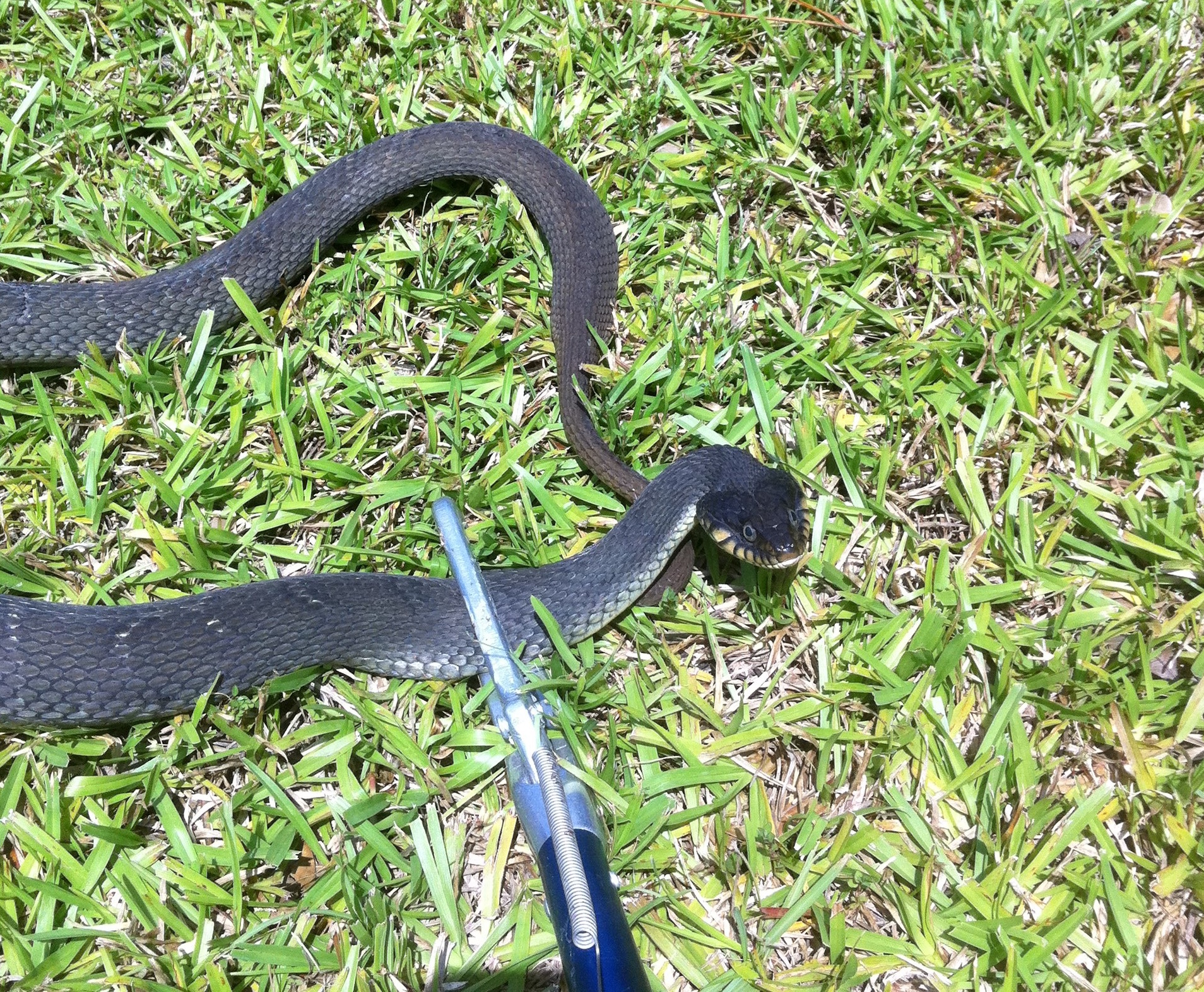 Snake Removal, Snakes, Snake Control, New Orleans Snake Removal