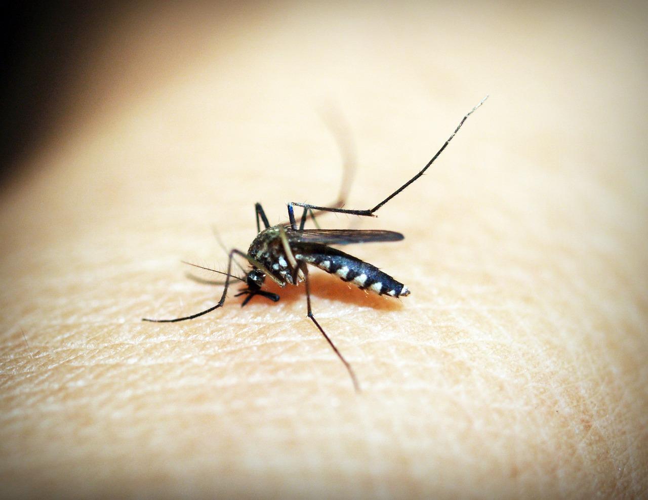 Mosquito Control, Mosquito Treatment, Pest Control, New Orleans Mosquito Exterminator