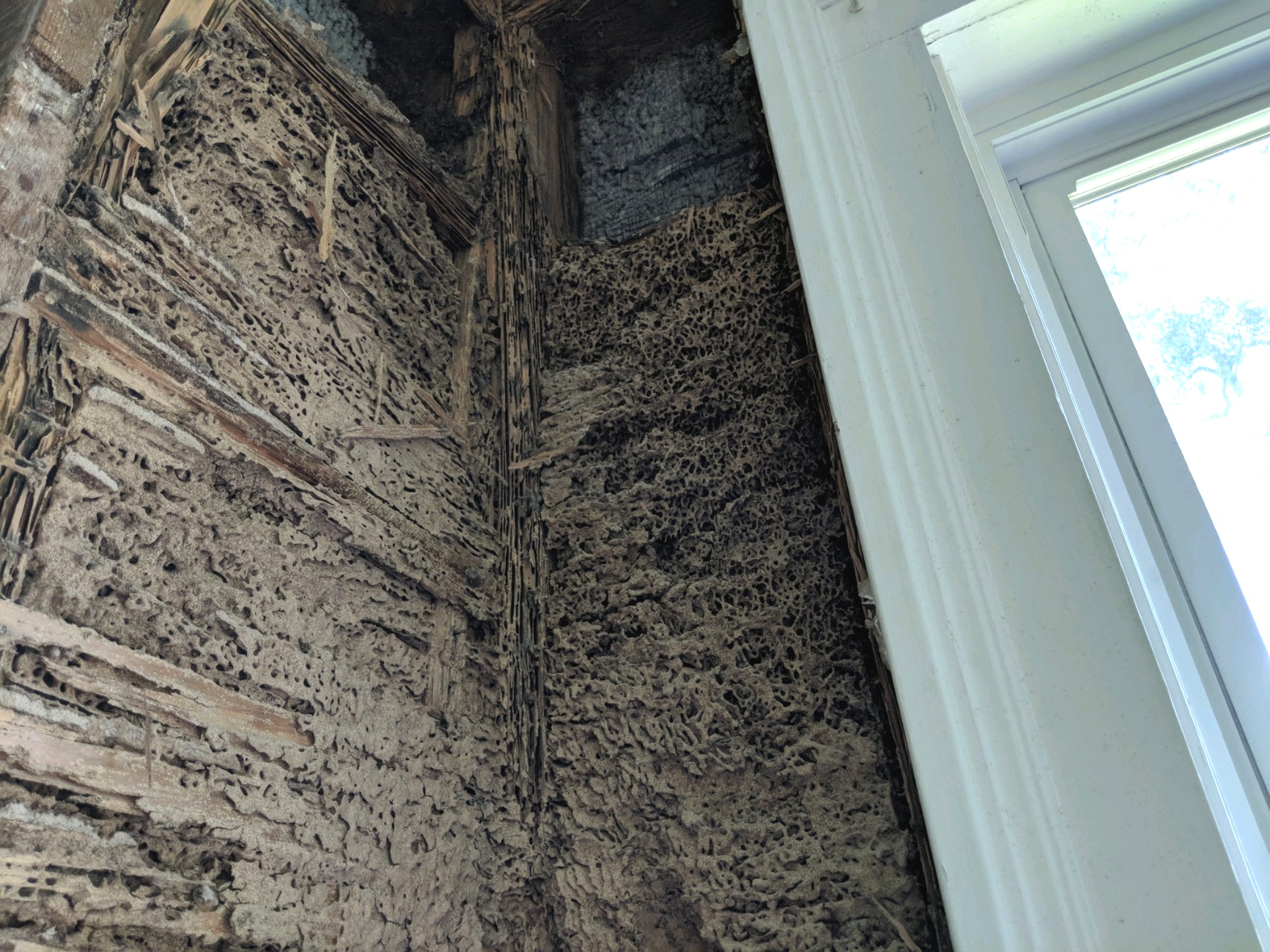 Termite Carton Nest In a House Interior Wall